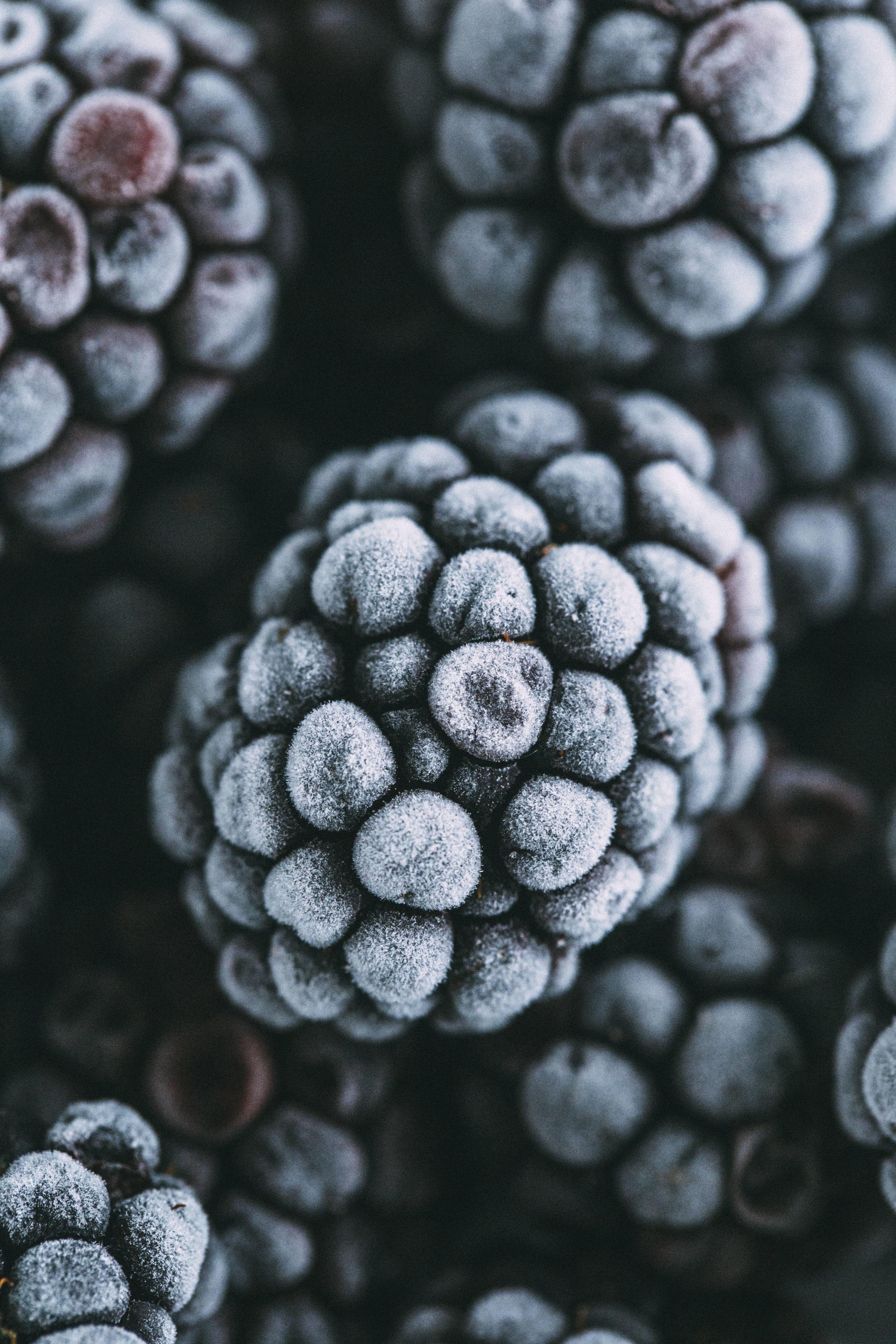 blackberries1 copy.jpg