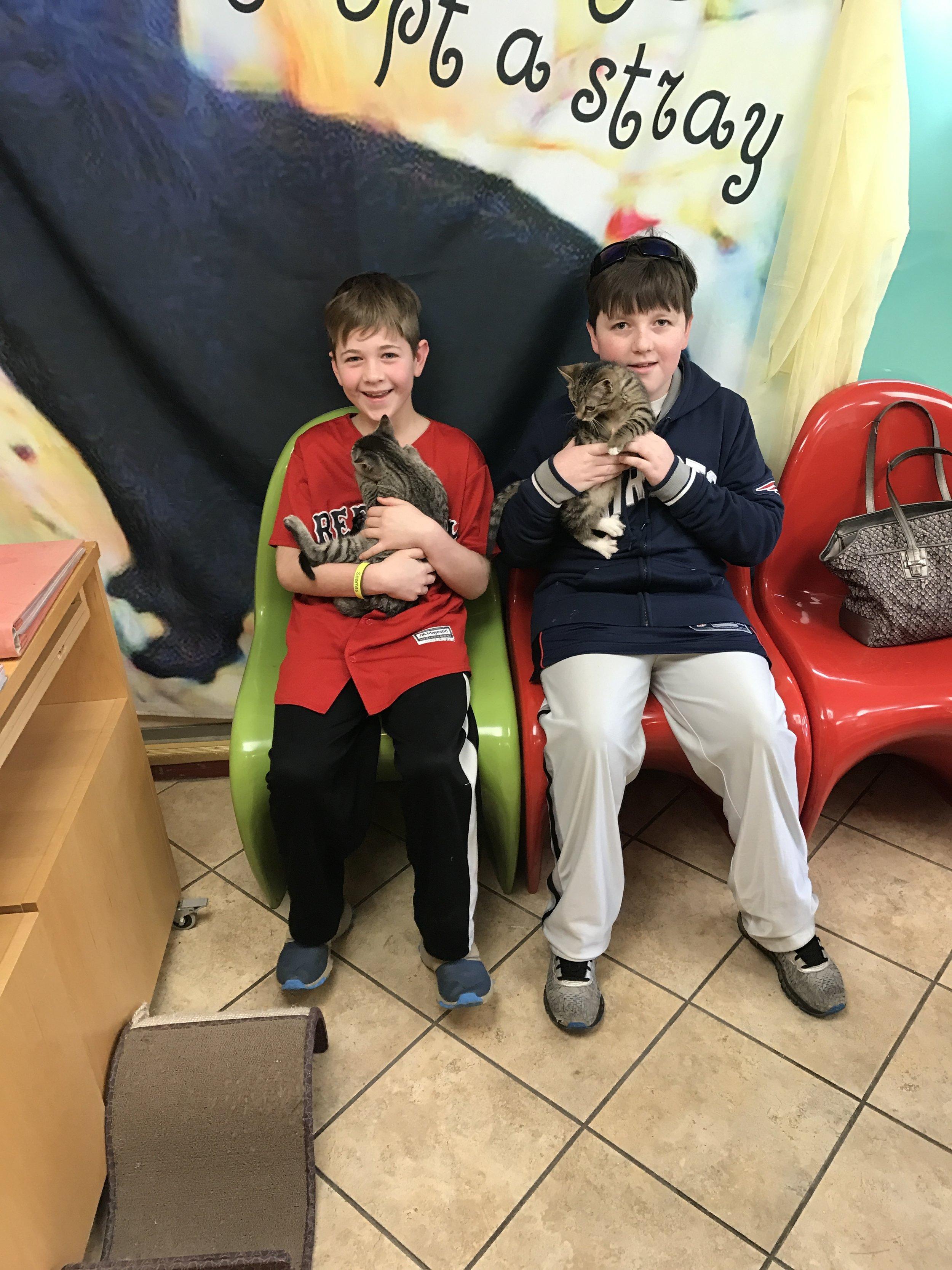 MEG & RYAN- foster kitties spay + neutered