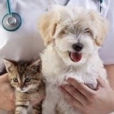 VETERINARIAN ASSISTANCE - AnimalKind is offering medical assistance for pets of low-income pet owners in need of medical care. Thanks to grants from the Banfield Foundation we are able to attend those pets in dire need of medical attention and treatment.