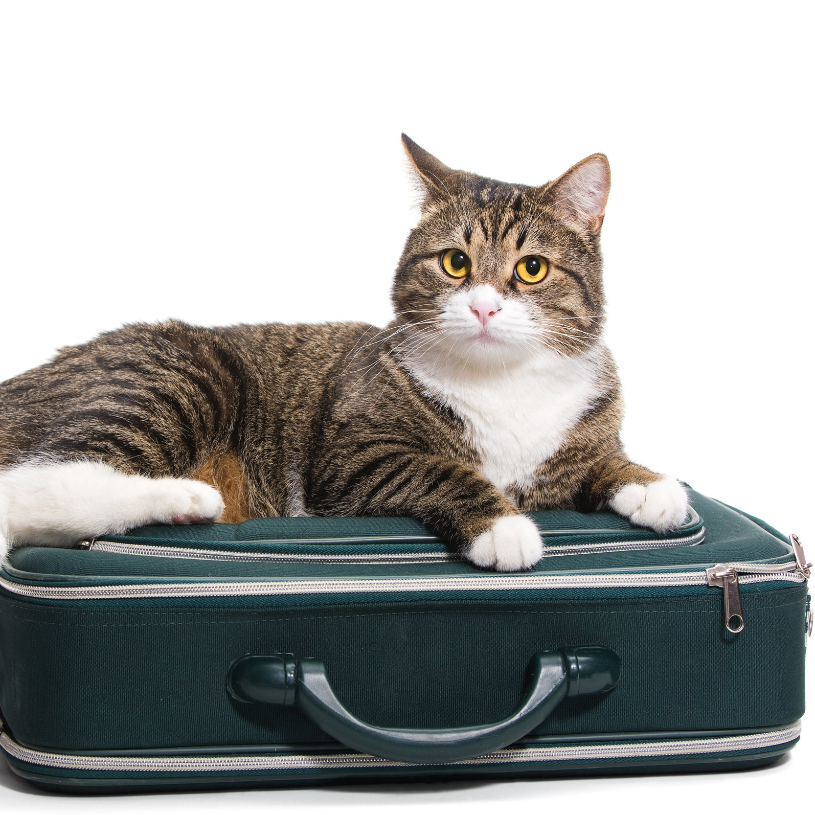 EMergency boarding - We're here to help. If you or someone you know requires emergency boarding for a beloved pet/cat or dog, we have limited space available at the shelter or, if appropriate, in the home of one of our foster families.