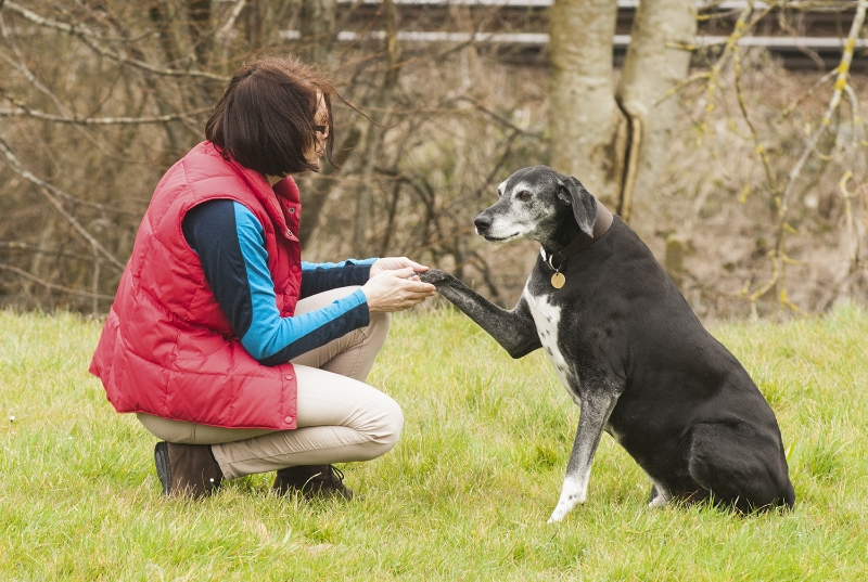 Woman and dog shaking hands