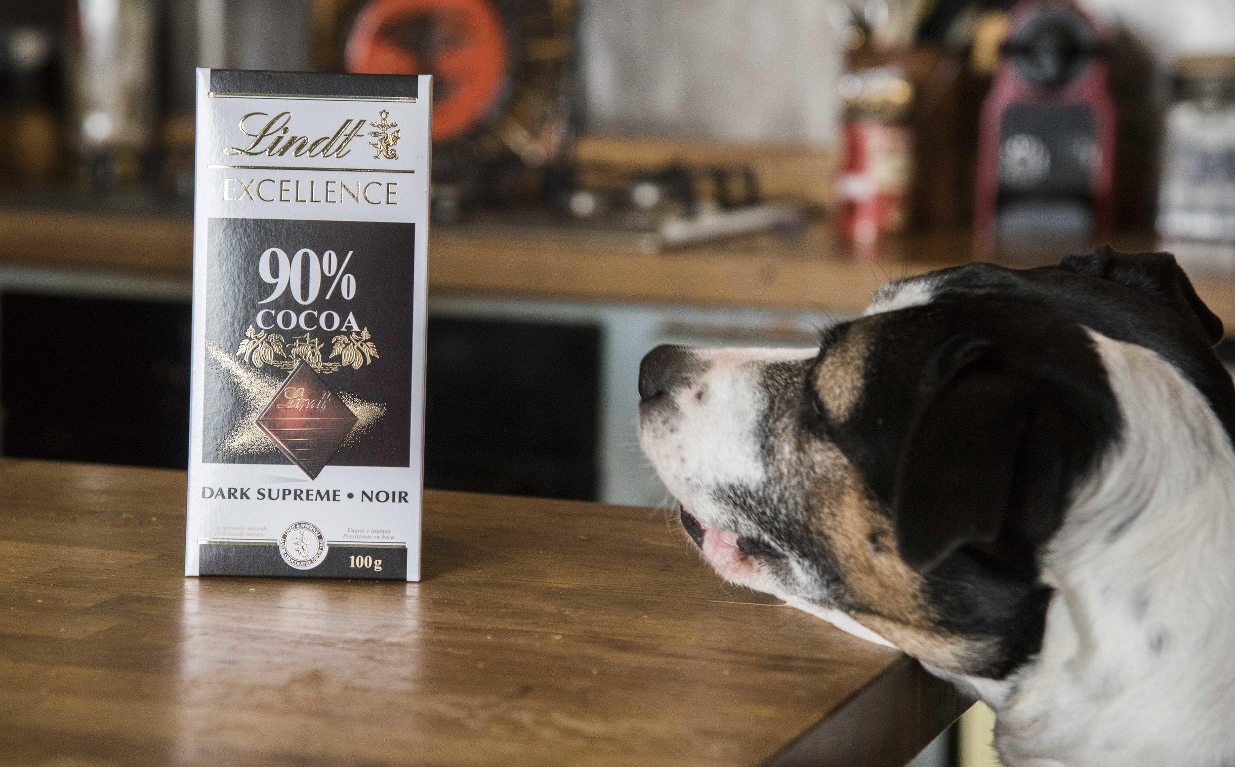 Dog looking at 90% chocolate.jpg