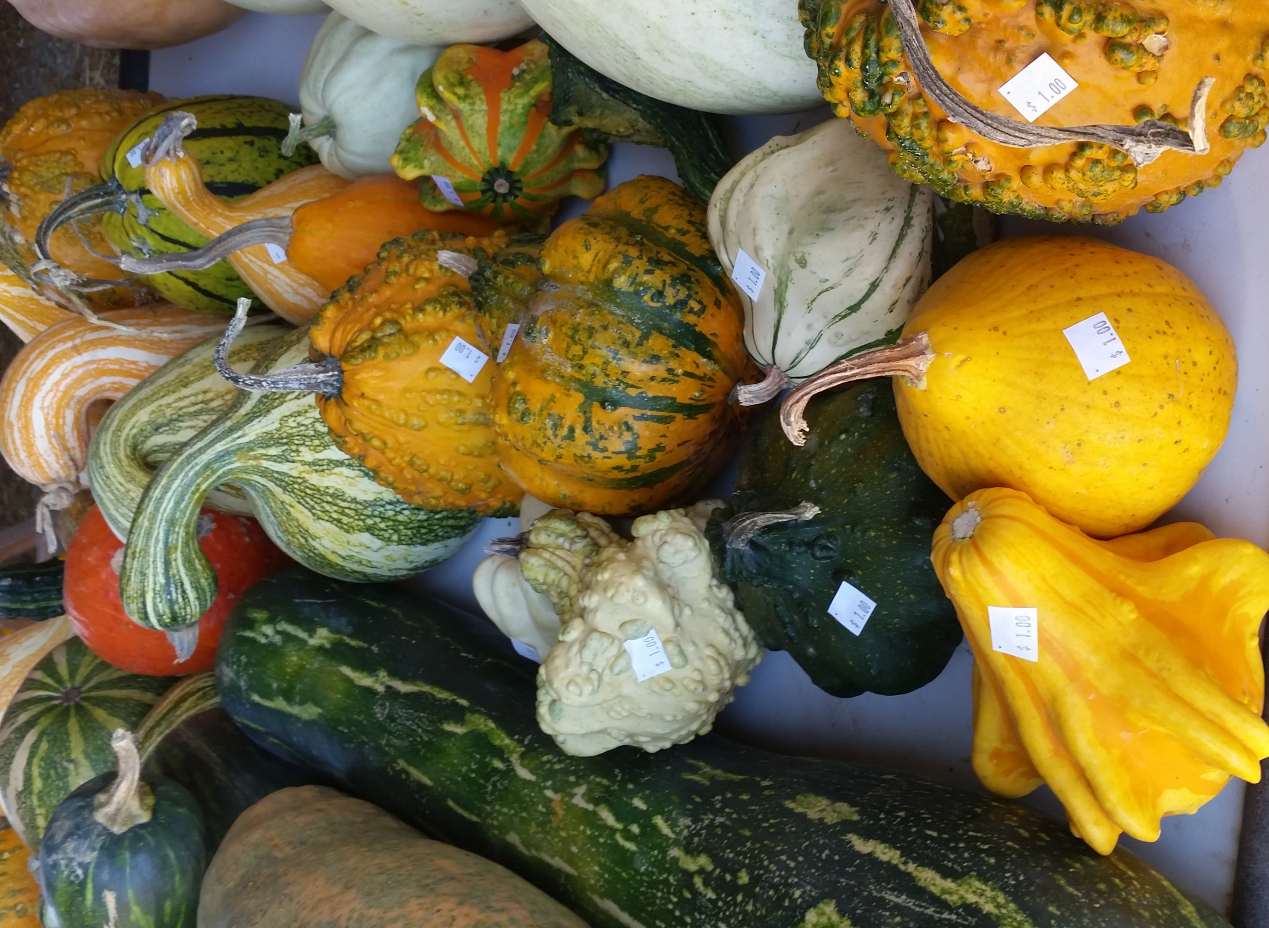 gourds.png
