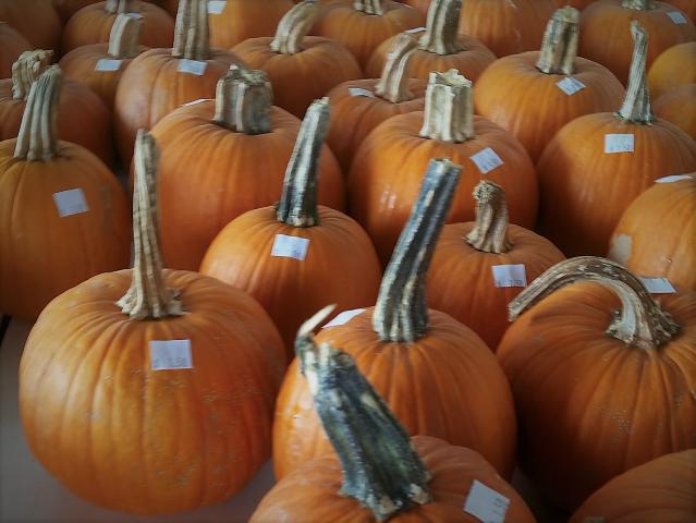 pie pumpkins (Small).png