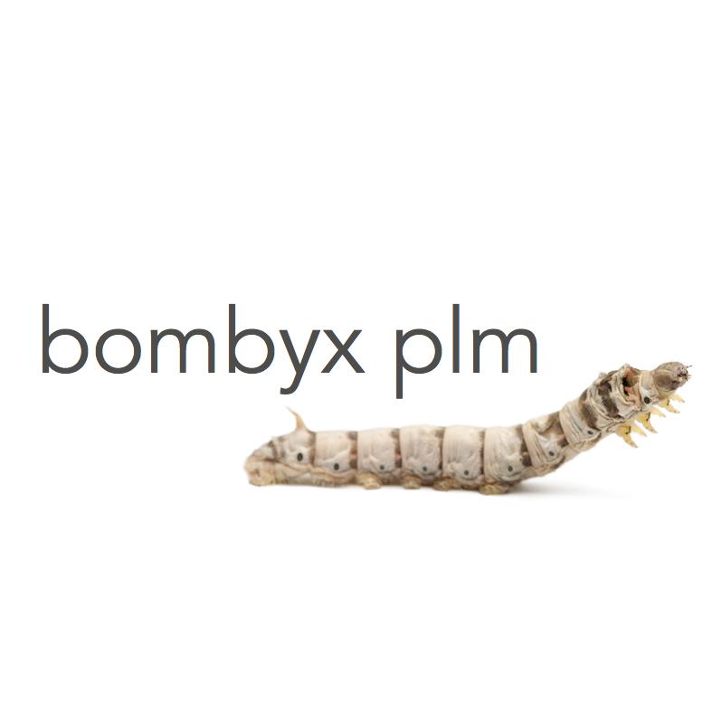 Bombyx Logo.png