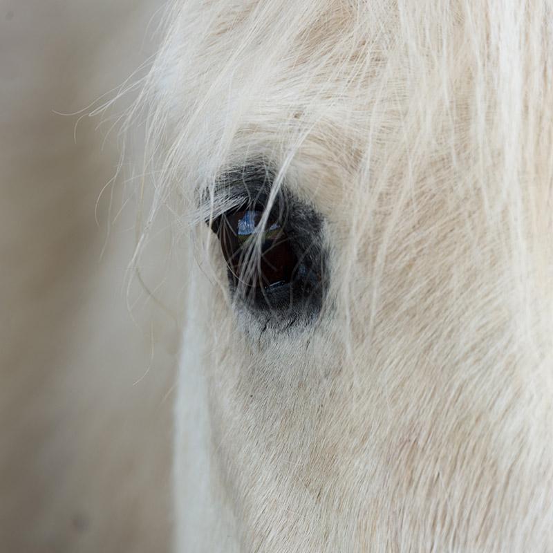 paard3.jpg
