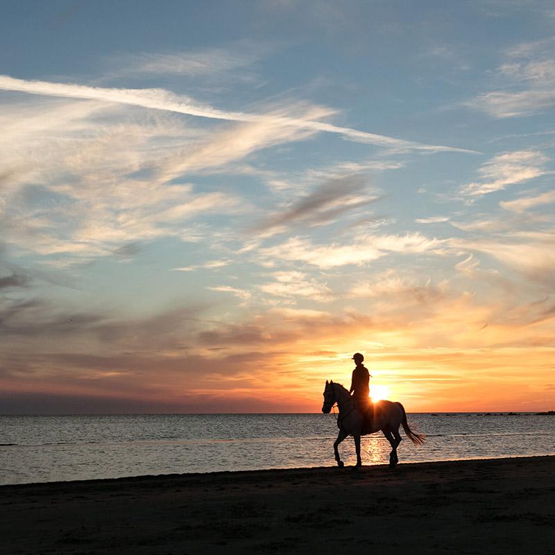 paard4.jpg