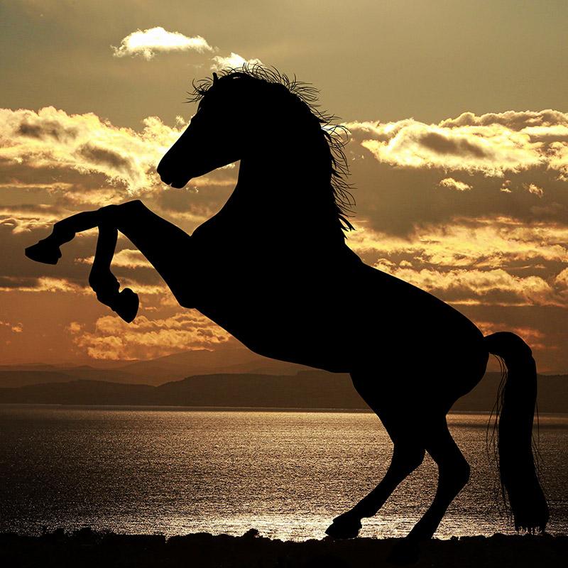 paard6.jpg