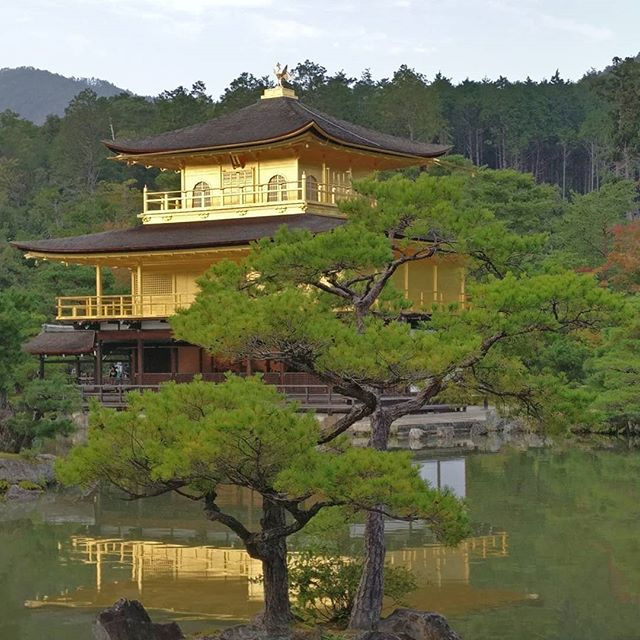 Japan is blowing my mind 💛 I'm lost for words #goldenpavilion #beautiful