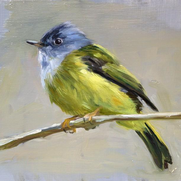 Canary Flycatcher
