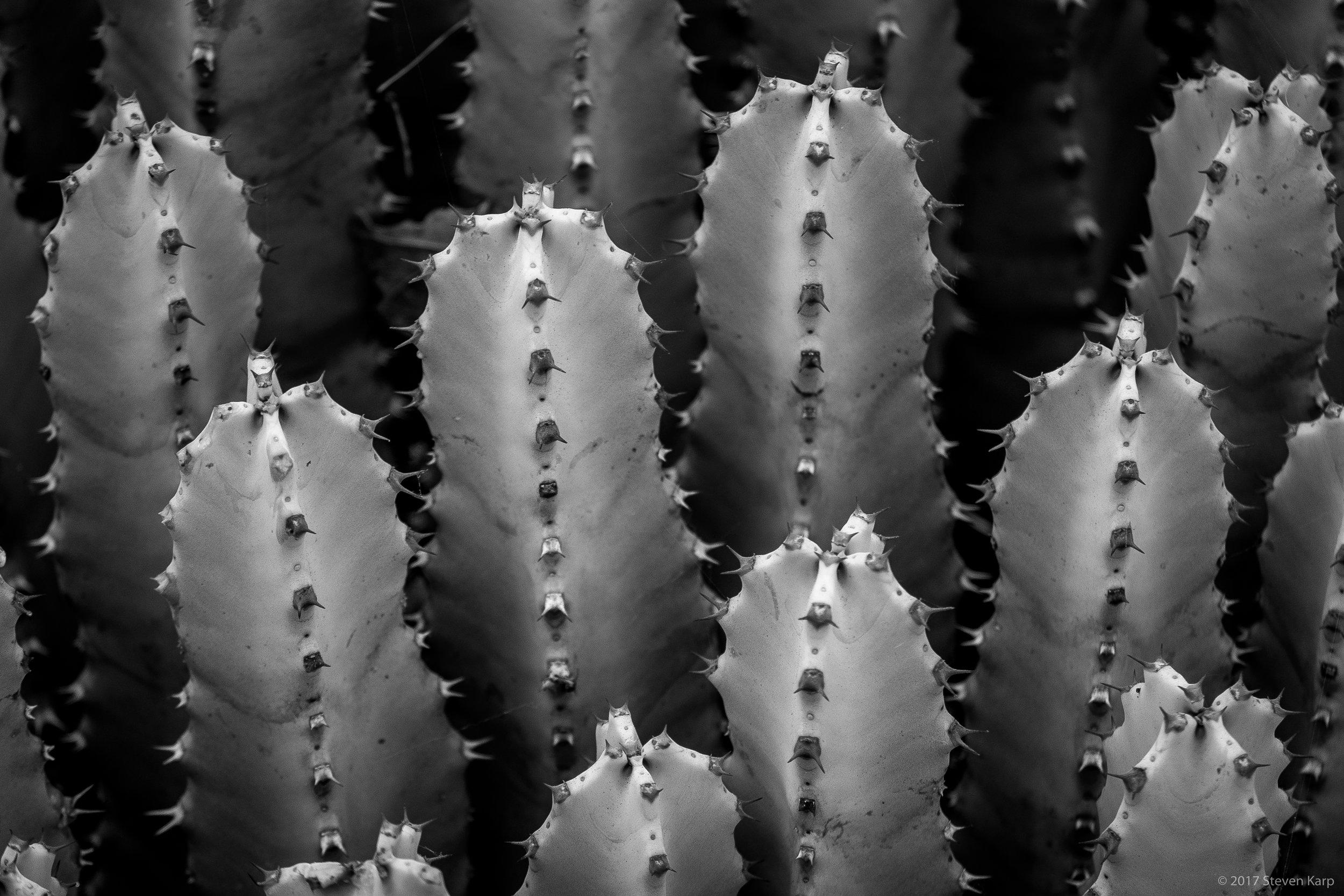 Cactus, Arizona Cactus Garden