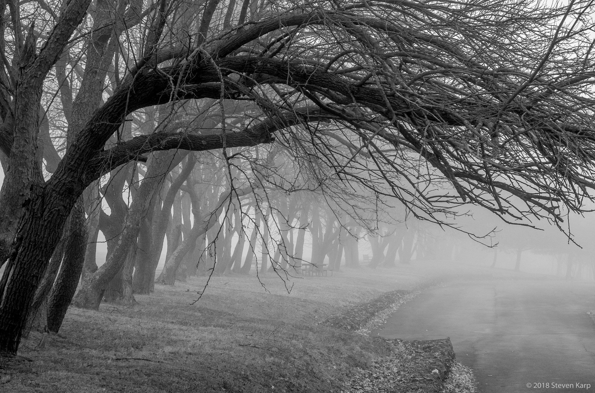 Fog on Trees