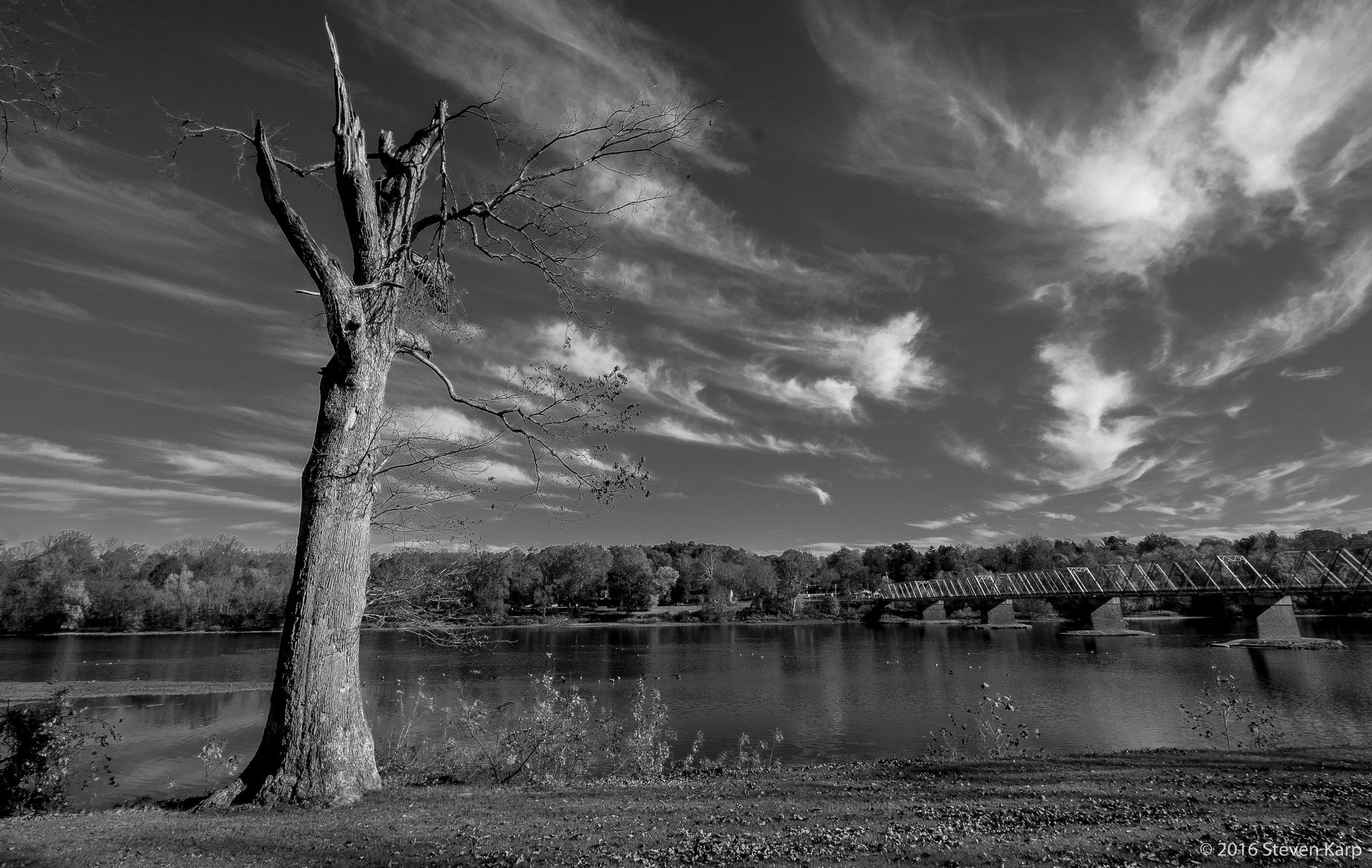 Dying Tree November 2016