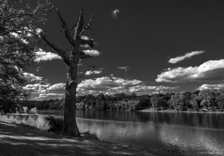 Dead Tree, June, 2018