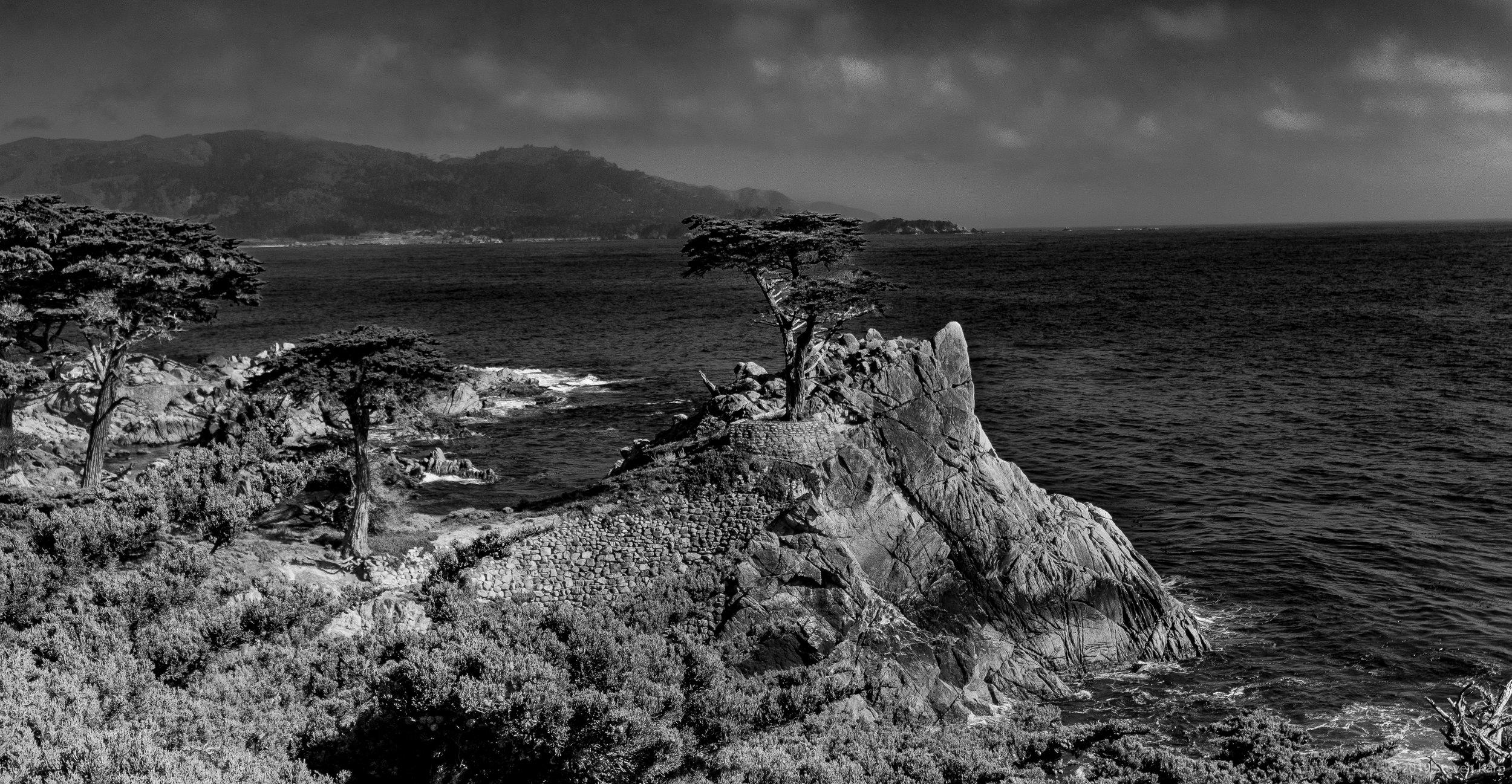 Lone Cypress ©2019 S. Karp