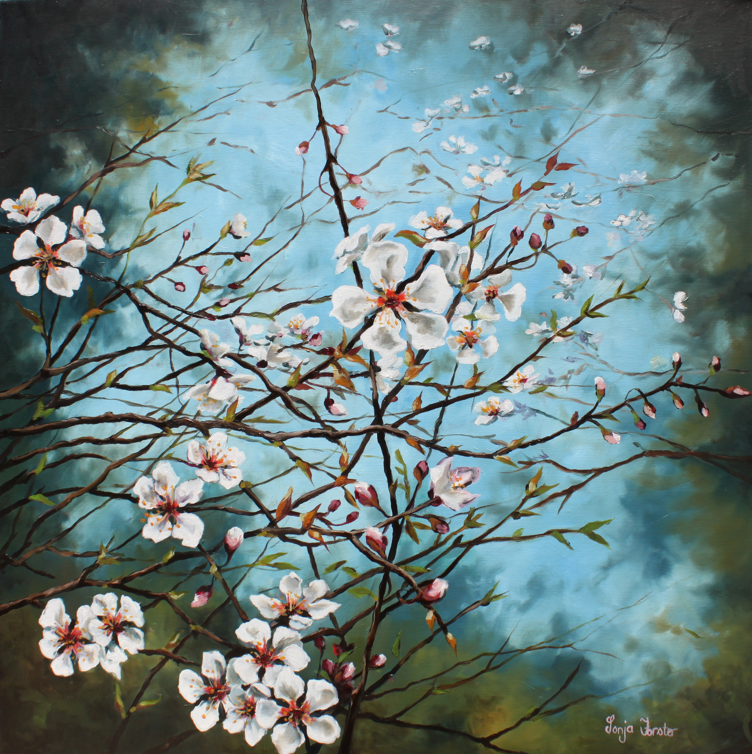 Sonja Forster Art - Blooming Cherry Blossoms.jpg