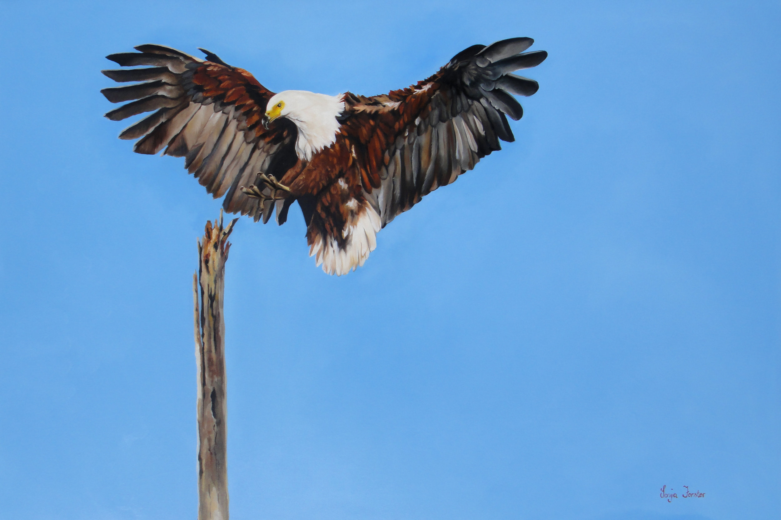 "Fish Eagle | Oil on Canvas | 60""x48"" 