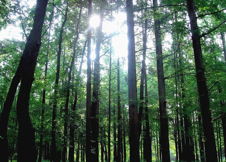 Forest_Osaka_Japan.jpg
