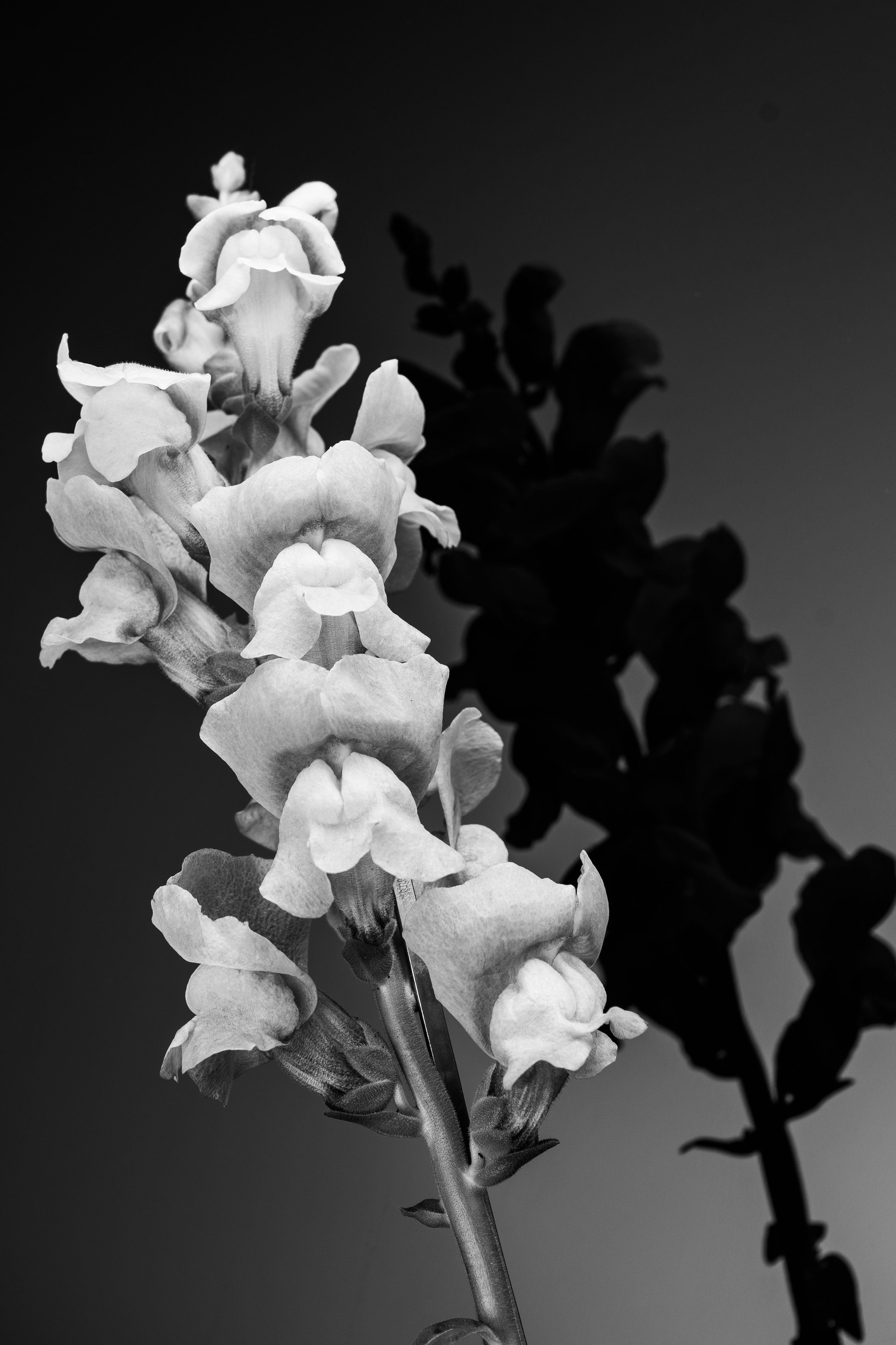 Flower_Black_and_White-1.jpg