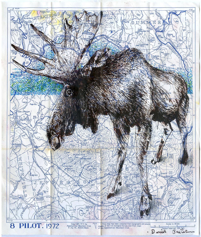 Daniel Baxter Moose drawing.jpg