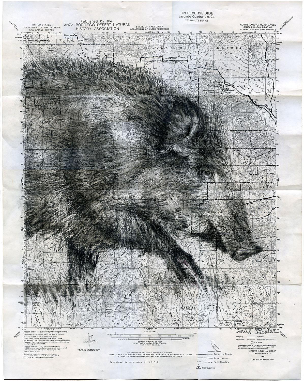 Daniel Baxter Wild Pig art.jpg