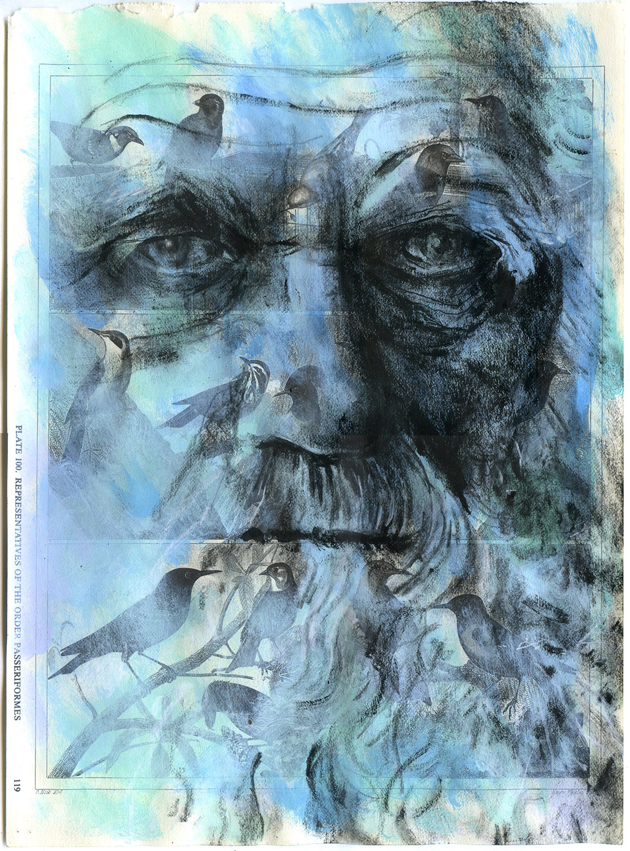 Copyright Daniel Baxter Charles Darwin study.jpg