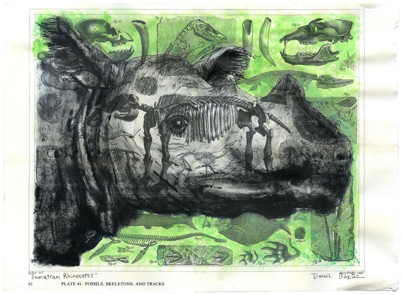 Copyright Daniel Baxter Sumatran Rhinoceros portrait.jpg