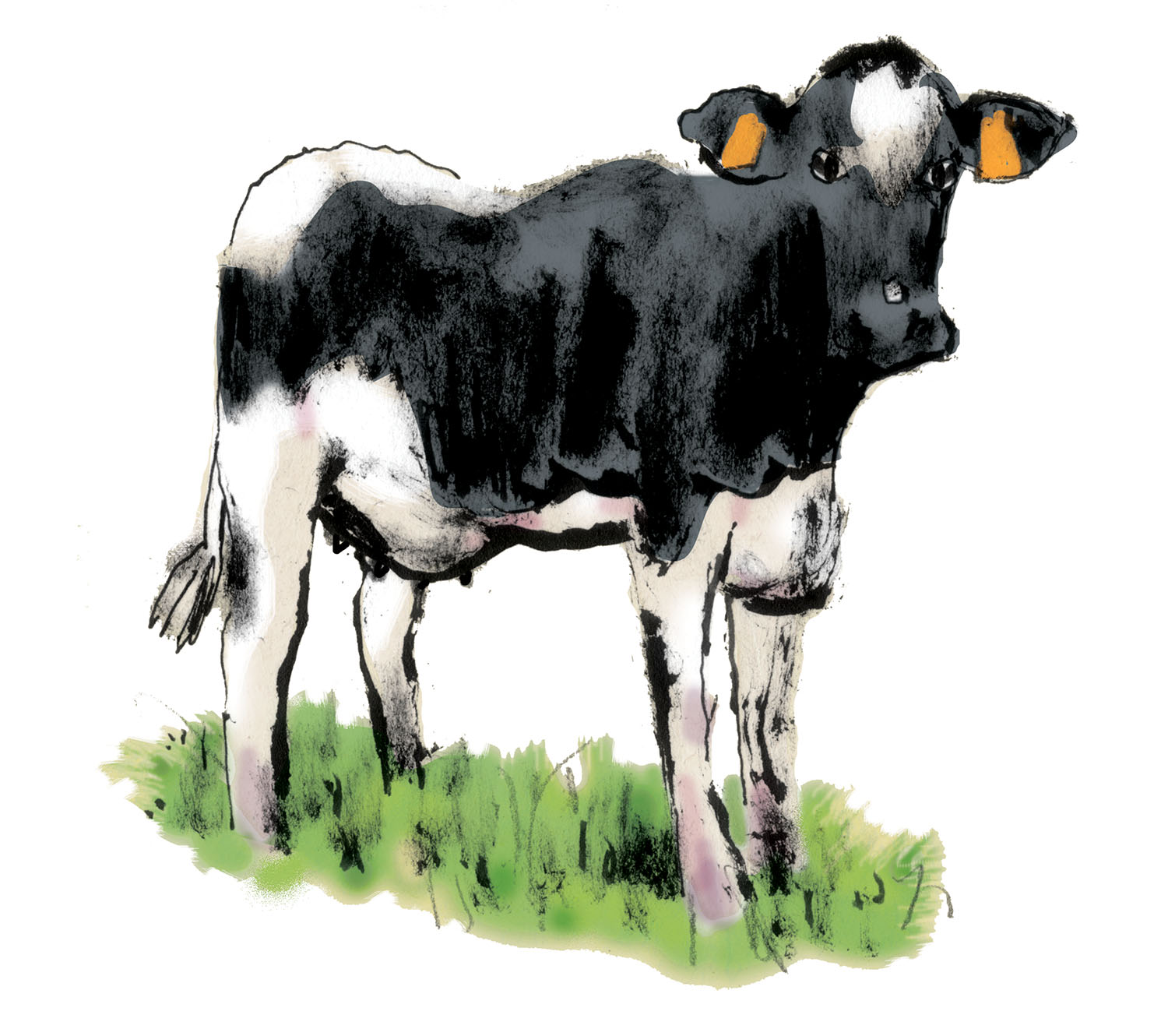 Copyright Daniel Baxter NY Fed Cow.jpg