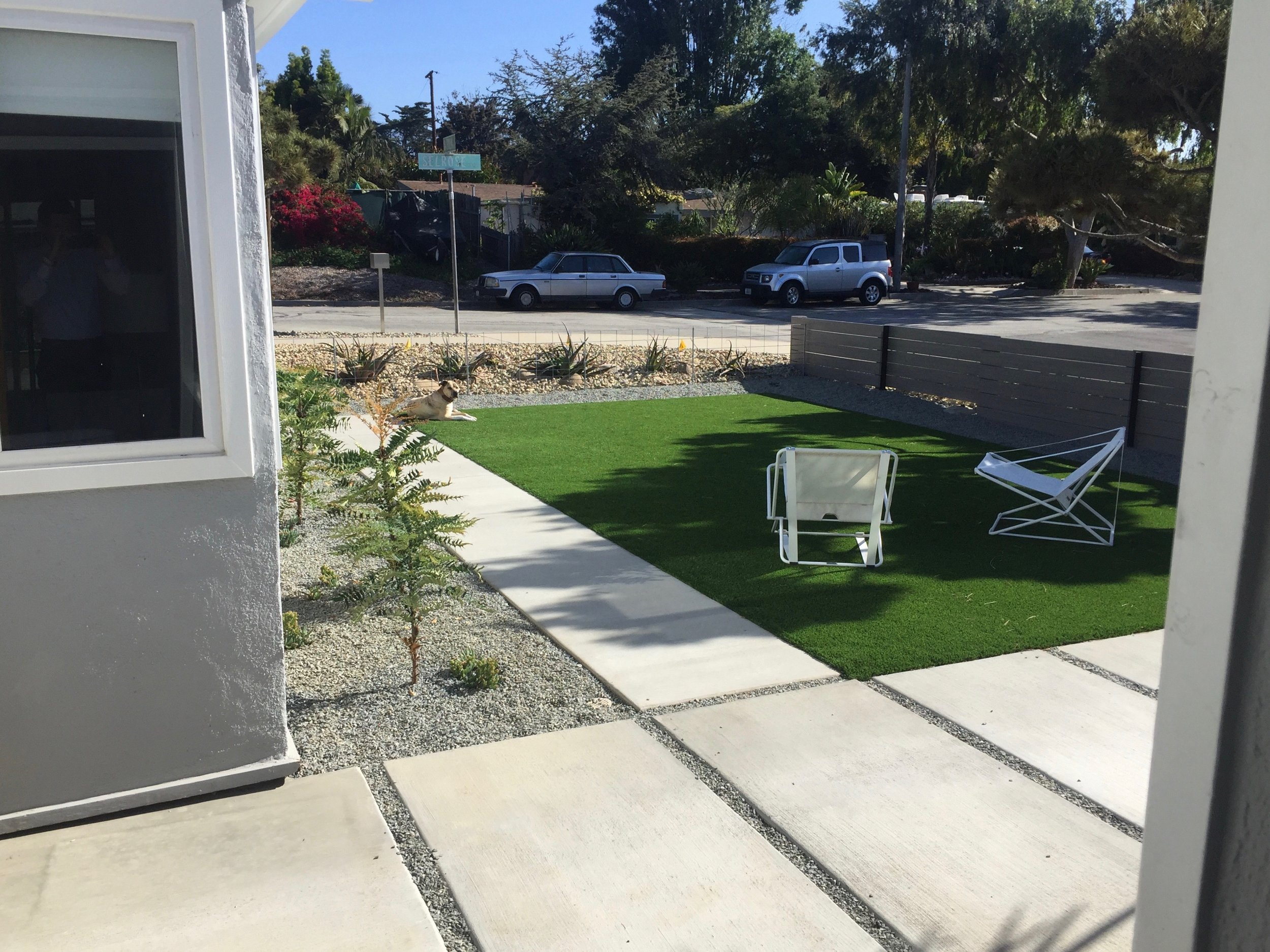 Modern artificial turf with pet-friendly filler - and pet - and Mahonia lomarifolia (a classic Mid Century accent plant)