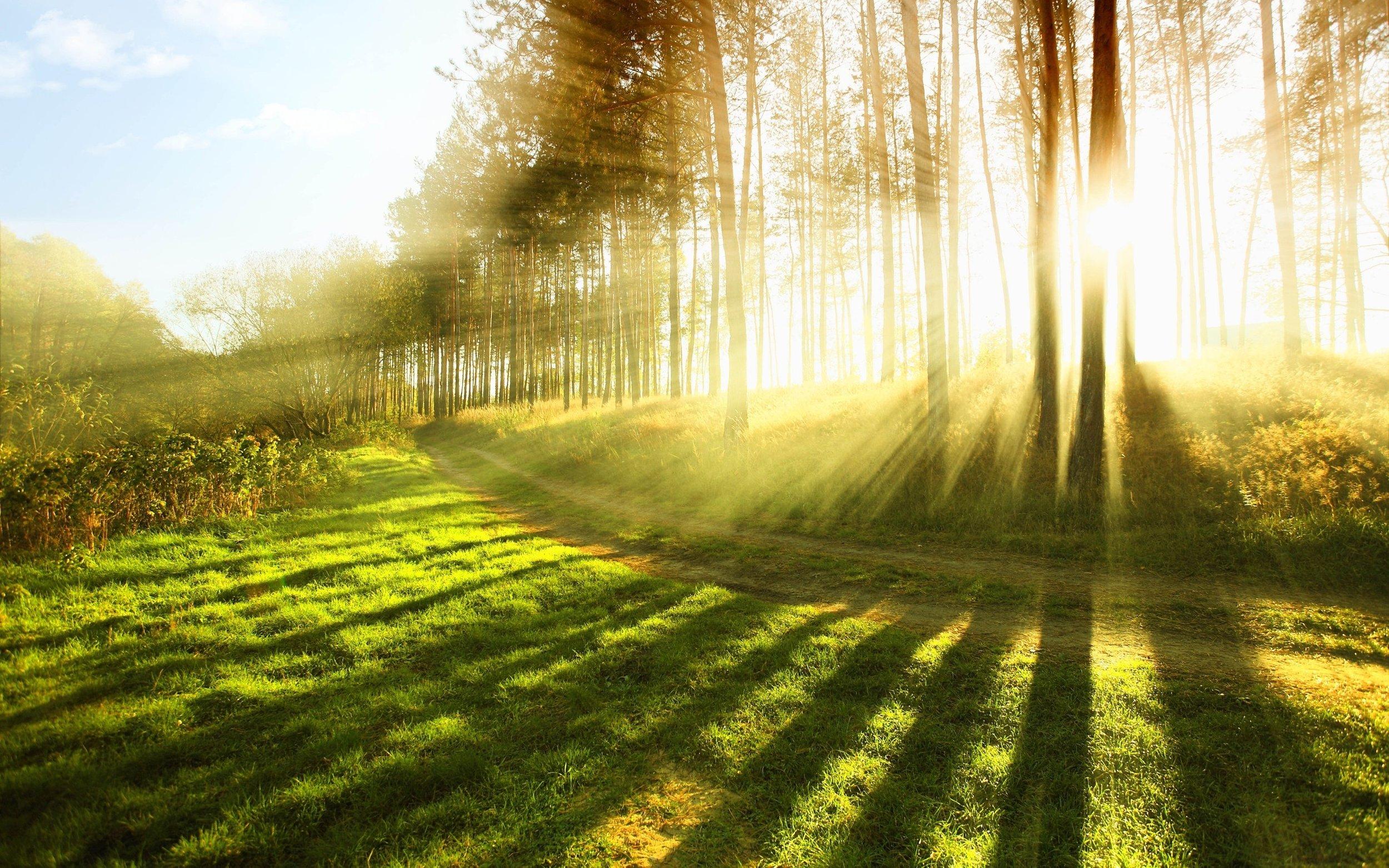 Sun Shining Through The Trees Religious Stock Photo.jpg