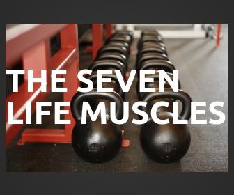 Life Muscles.jpg