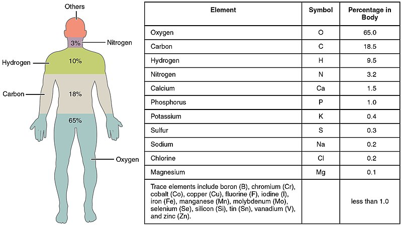 Constitution of the human body (   Wikipedia   )