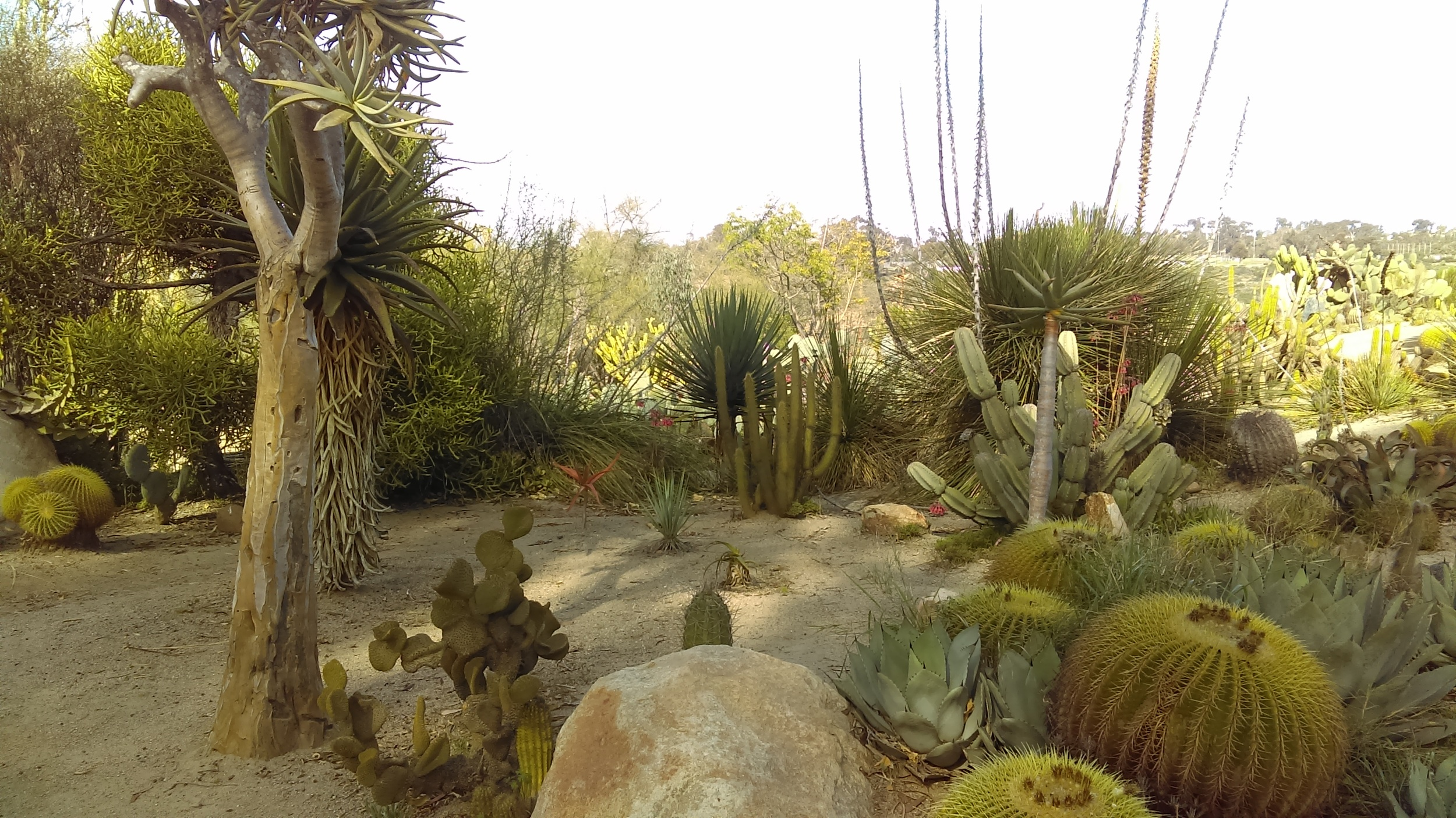 Stevko-San Diego-Cacti.jpg