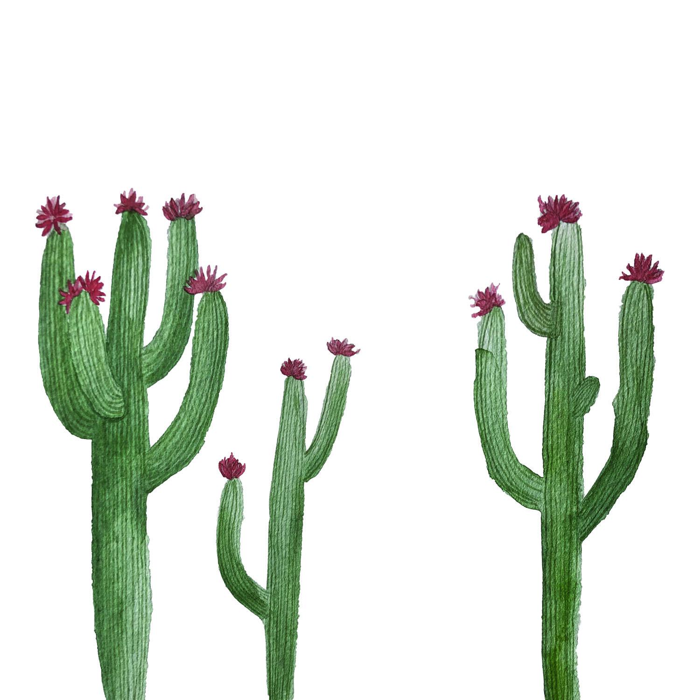 Saguaro Trio.jpg