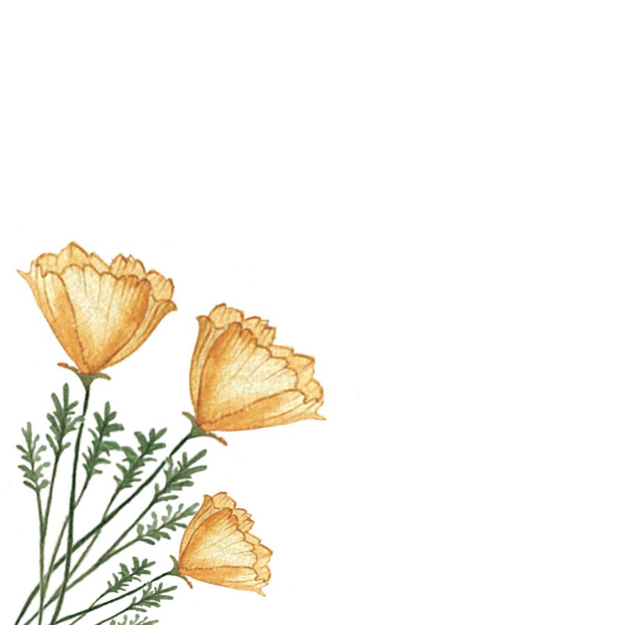 Super Bloom Poppy.jpg