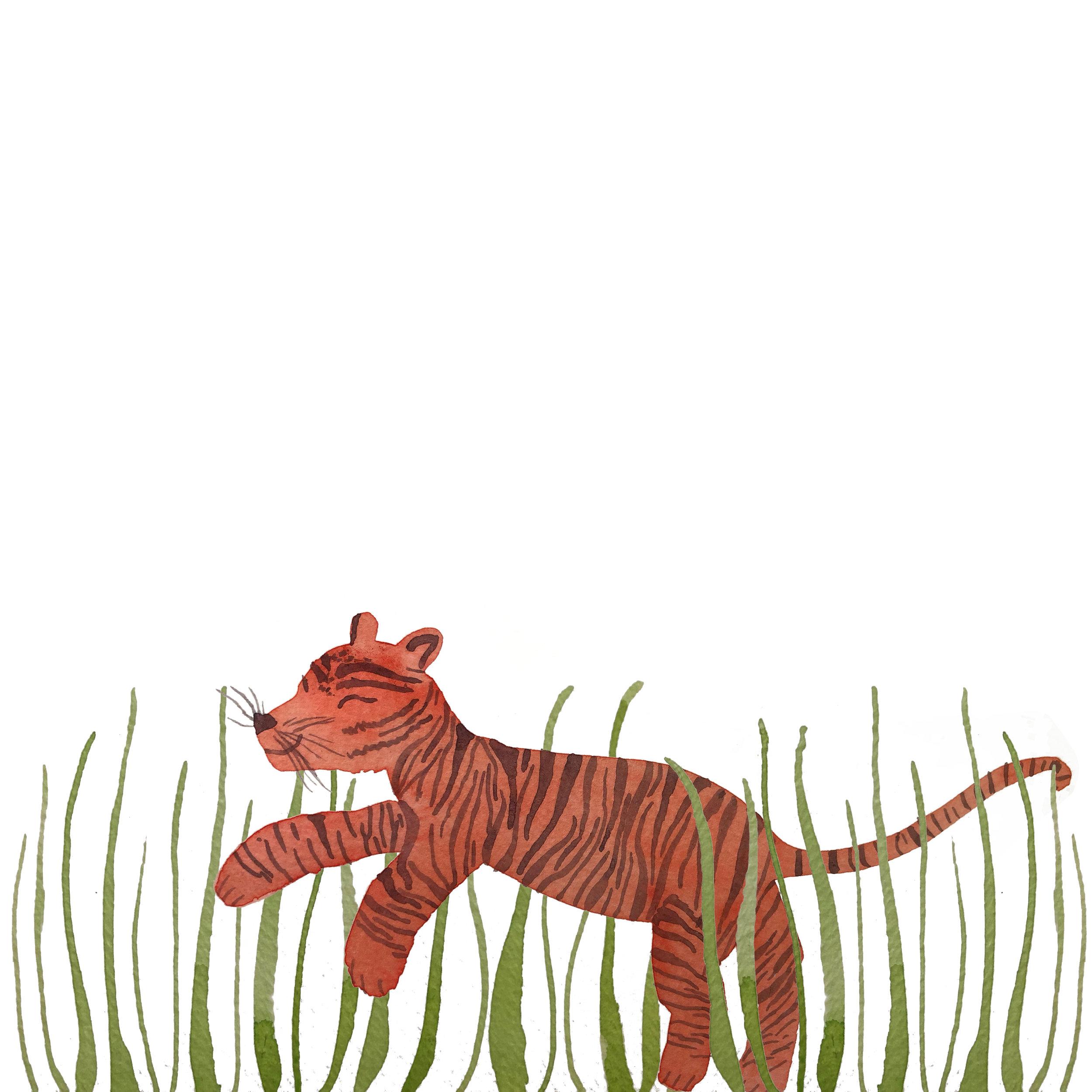 Tiger Illustration.jpg
