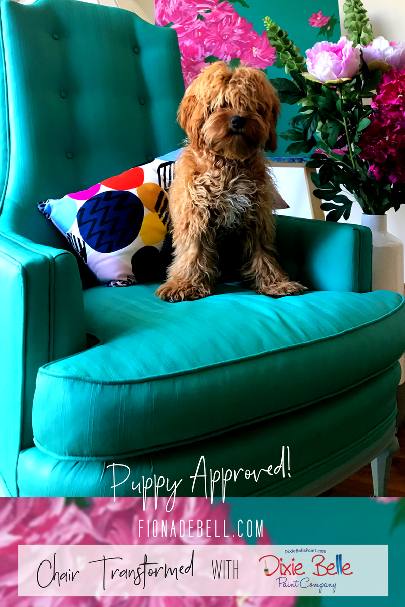 Cockapoo Puppy Molly sitting on a painted chair. | fionadebell.com