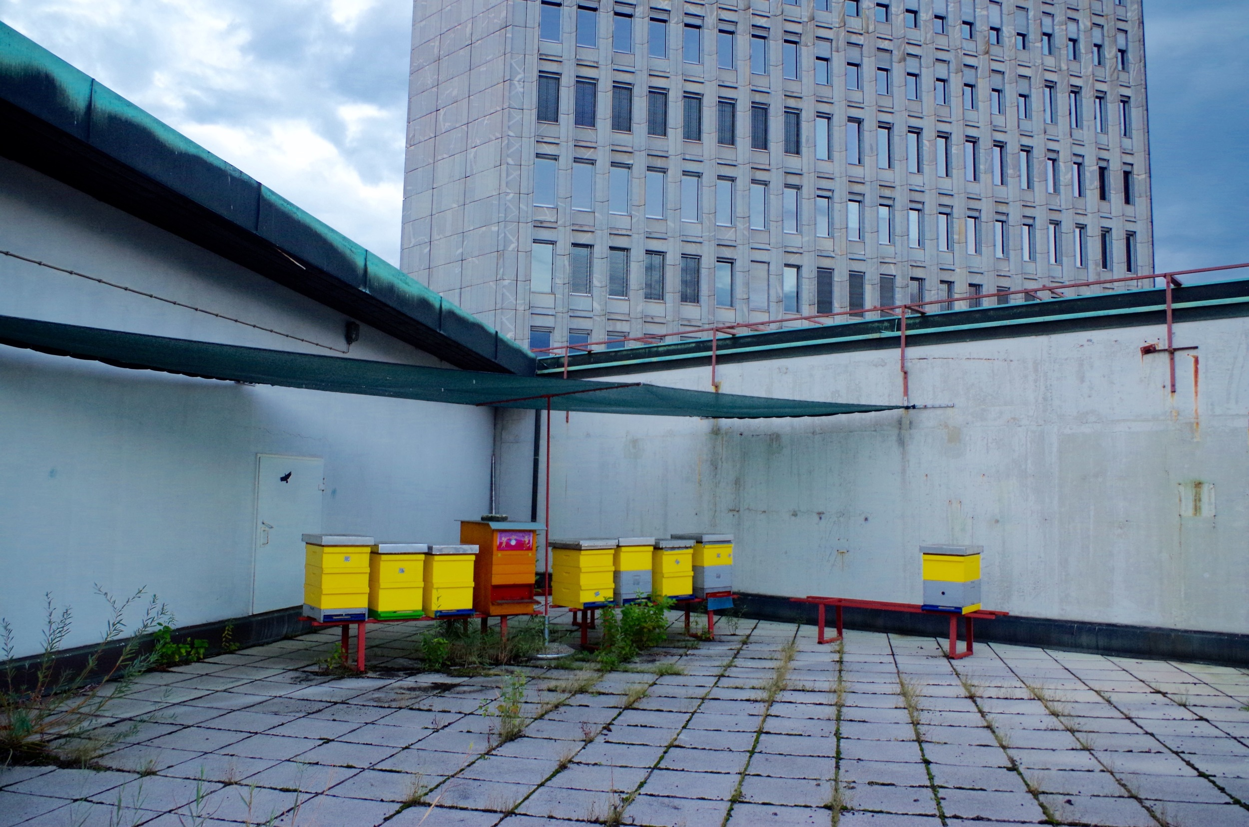 Beekeeping on the roof of Cankarjev Dom (the Ljubljana cultural centre)