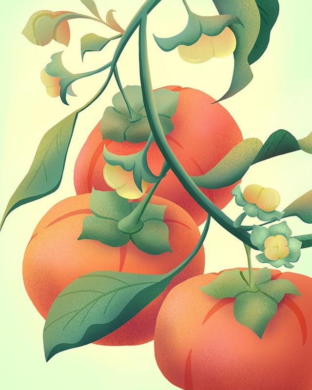 Excited for my persimmons to be ripe 🧡 they taste like home. This is also my first @procreate creation! It was definitely a learning experience | psa: treat our earth with kindness, she provides us with so much. Like fresh fruit!