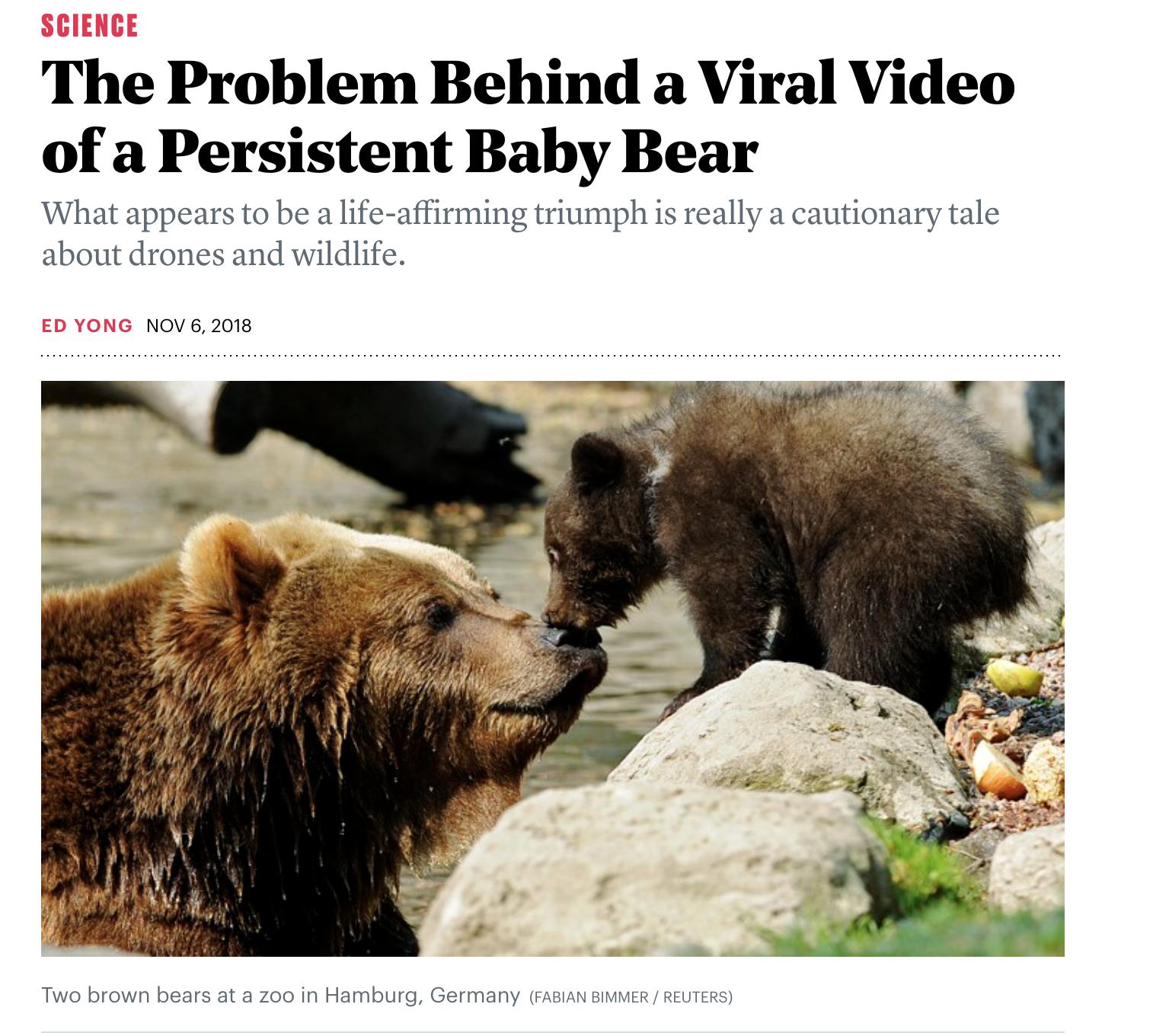 2018 Atlantic bears.png