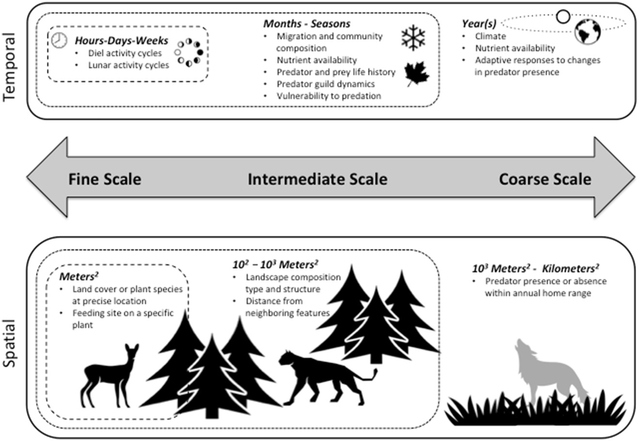Fig. 2.Both temporal (top) and spatial (bottom) scales of risk effects may be considered along a continuum ranging from fine scale to coarse scale, the extent and resolution of which will vary depending on the study system and species. The spatial scales presented in this framework are roughly analogous to 4th-order selection (fine scale), 3rd-order selection (intermediate scale), and 2nd-order selection (coarse scale) proposed by Johnson (1980) . The appropriate scale(s) of analysis will depend on the goals of the study, resolution of the data, and practical limitations.