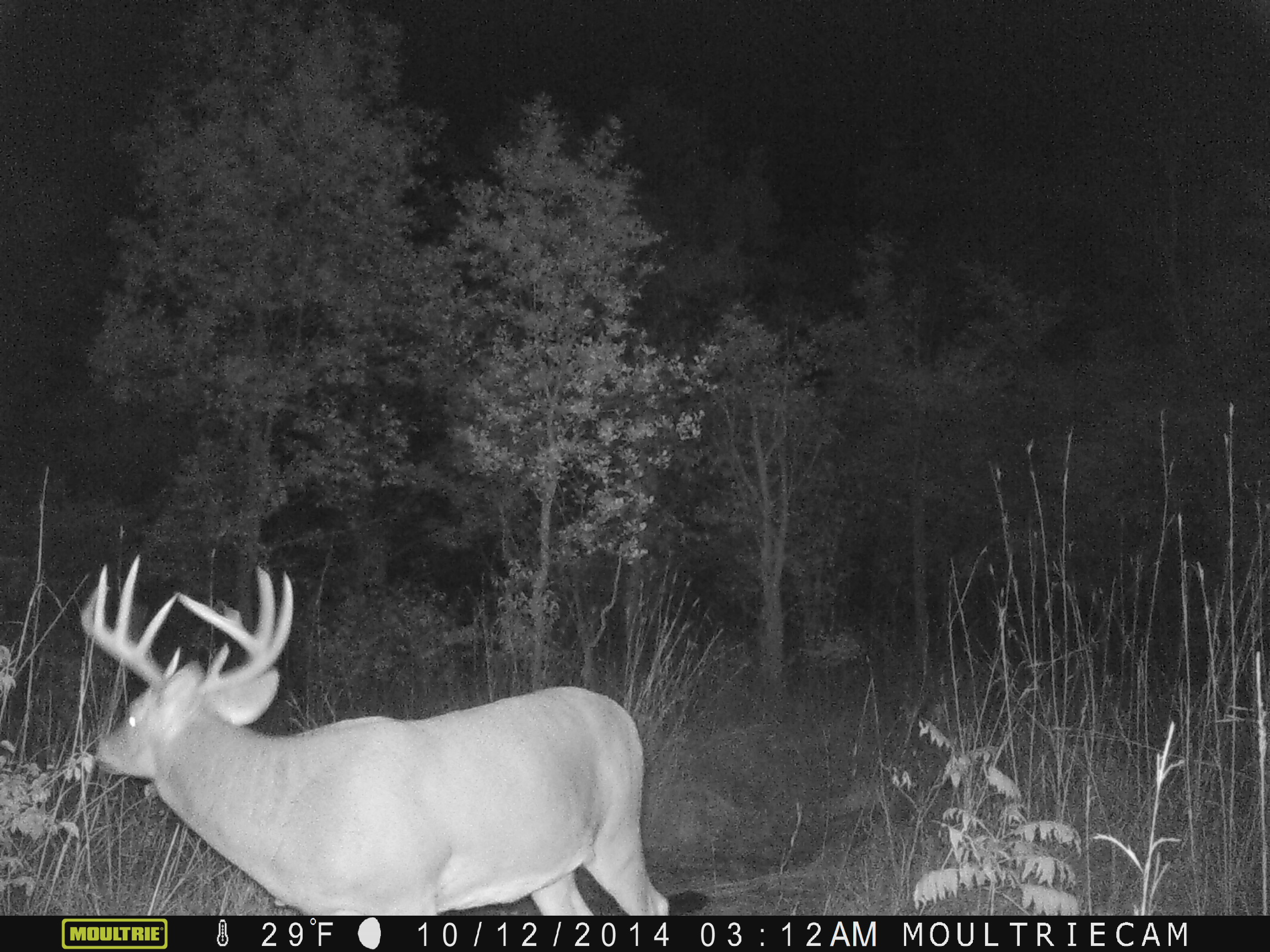 Our number one hit list buck that I had an encounter with November 1, 2014.