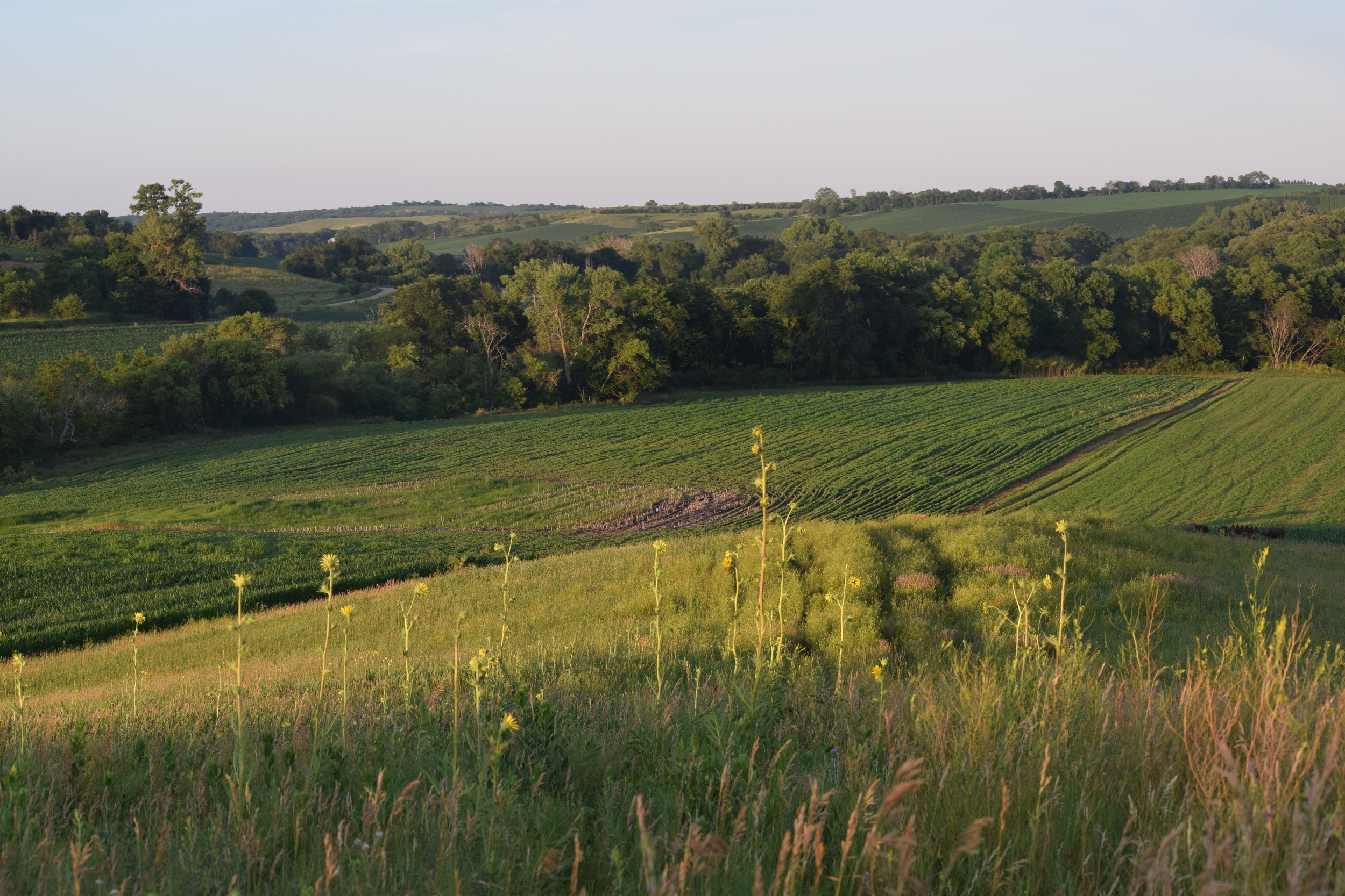 I had high hopes of this secluded bean field being a food source for a mature buck.
