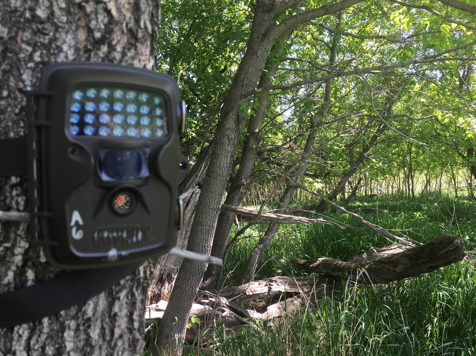 Want to learn more about how I use trail cameras? You can read more about my trail camera strategies in  The Perfect Trail Cam Setup and  Trail Cameras, Help or Hindrance?