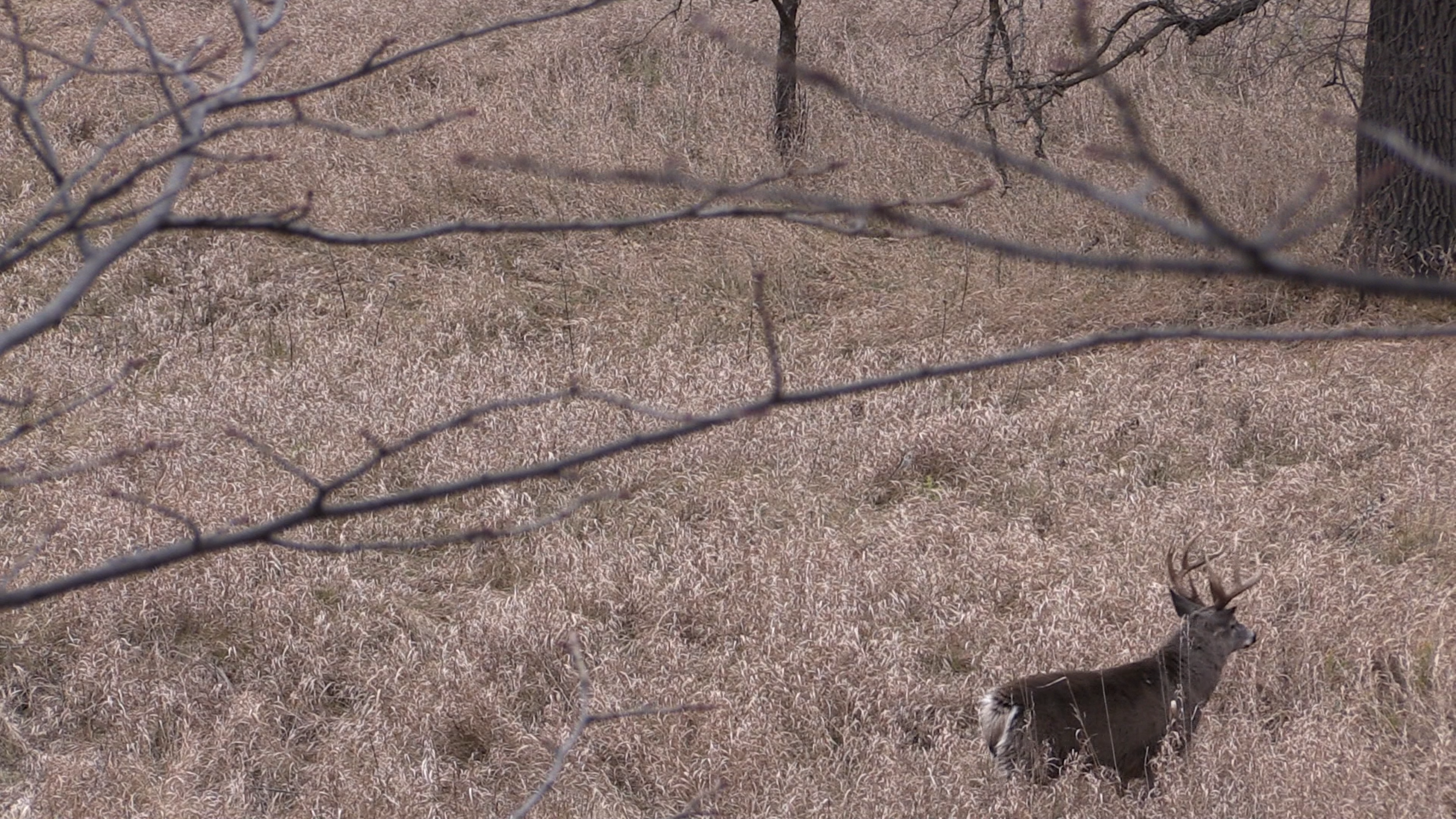 Moments before the shot...the buck walked out of the frame before I could get a shot off.
