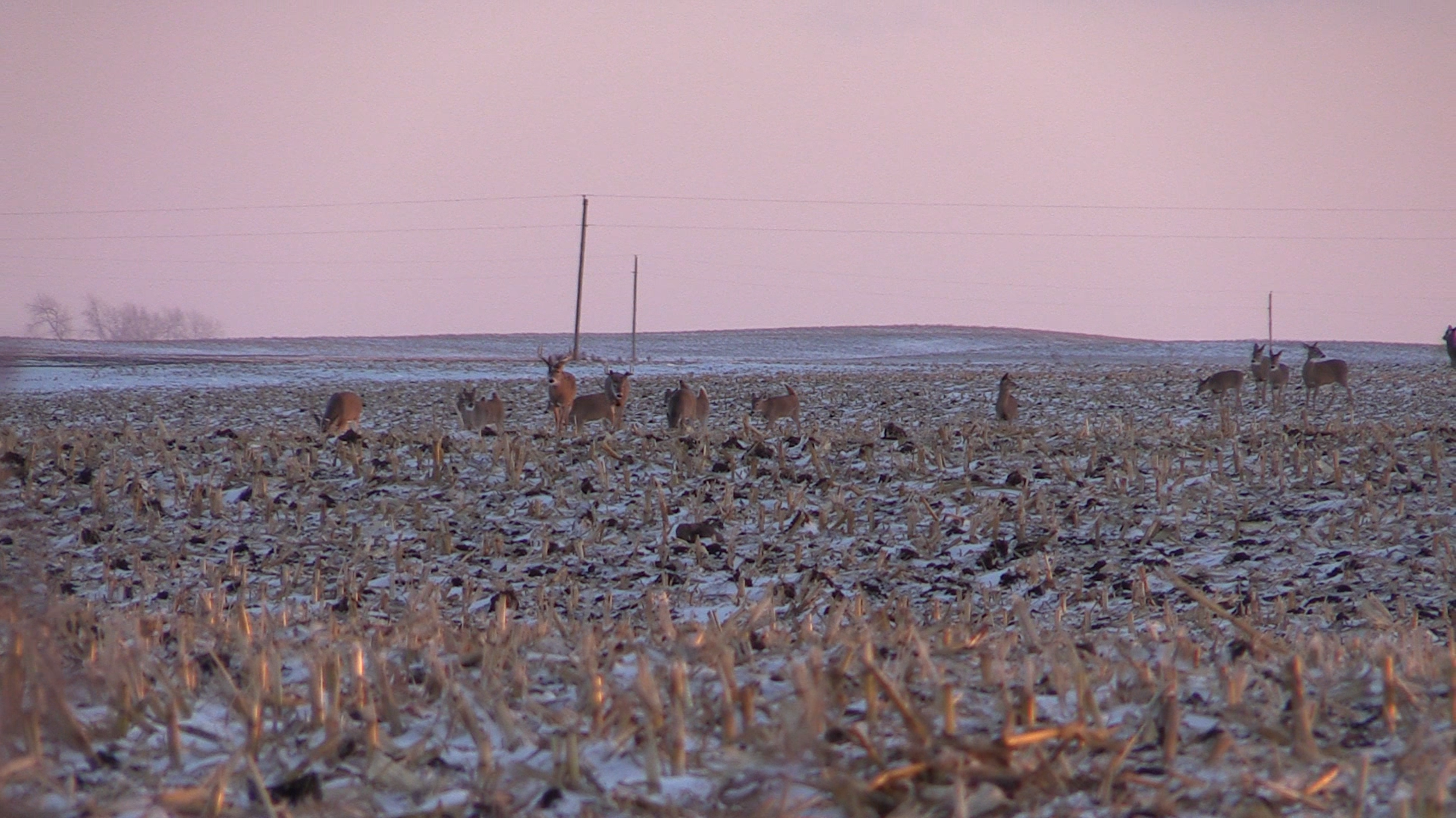A screenshot from the video as I watched a number of deer head right at me.