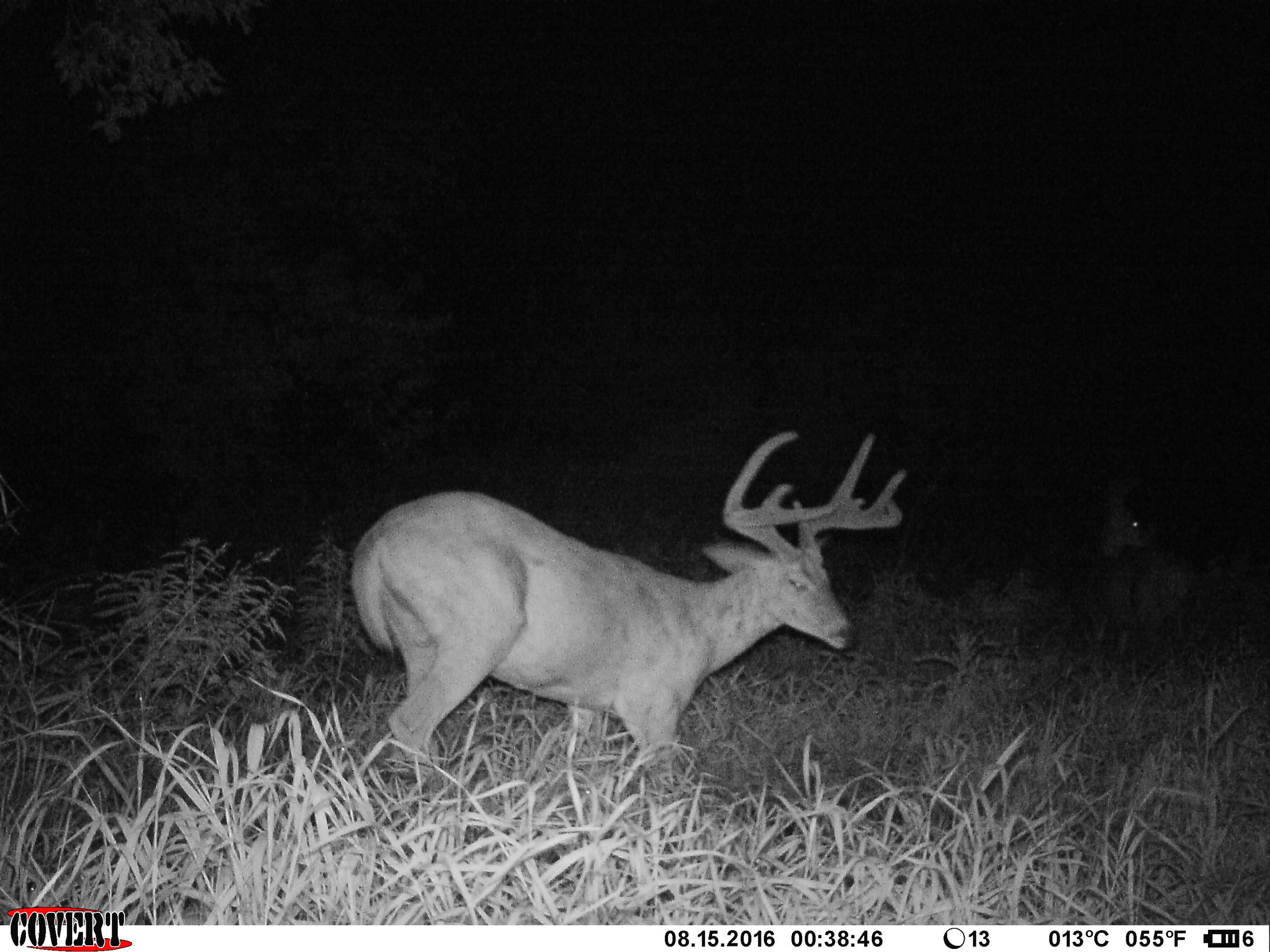 """This is the photo that led me and Tyler to name him """"Geezer"""". With how his eye looked in this picture, he just looked super old to me. In 2016, I thought he would be a 4-5 year old buck."""