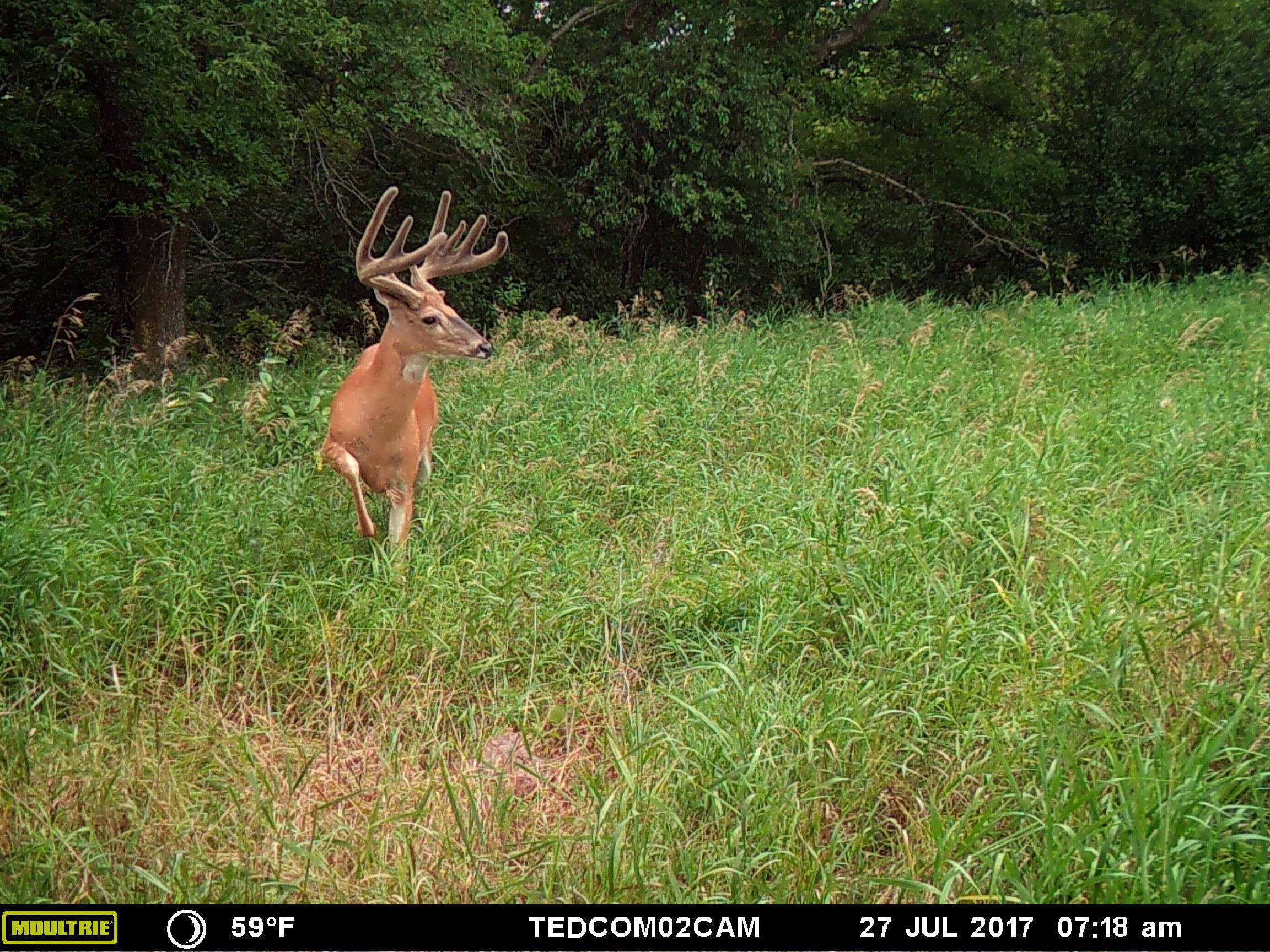 This year, I think I have a legitimate shot at killing this buck.