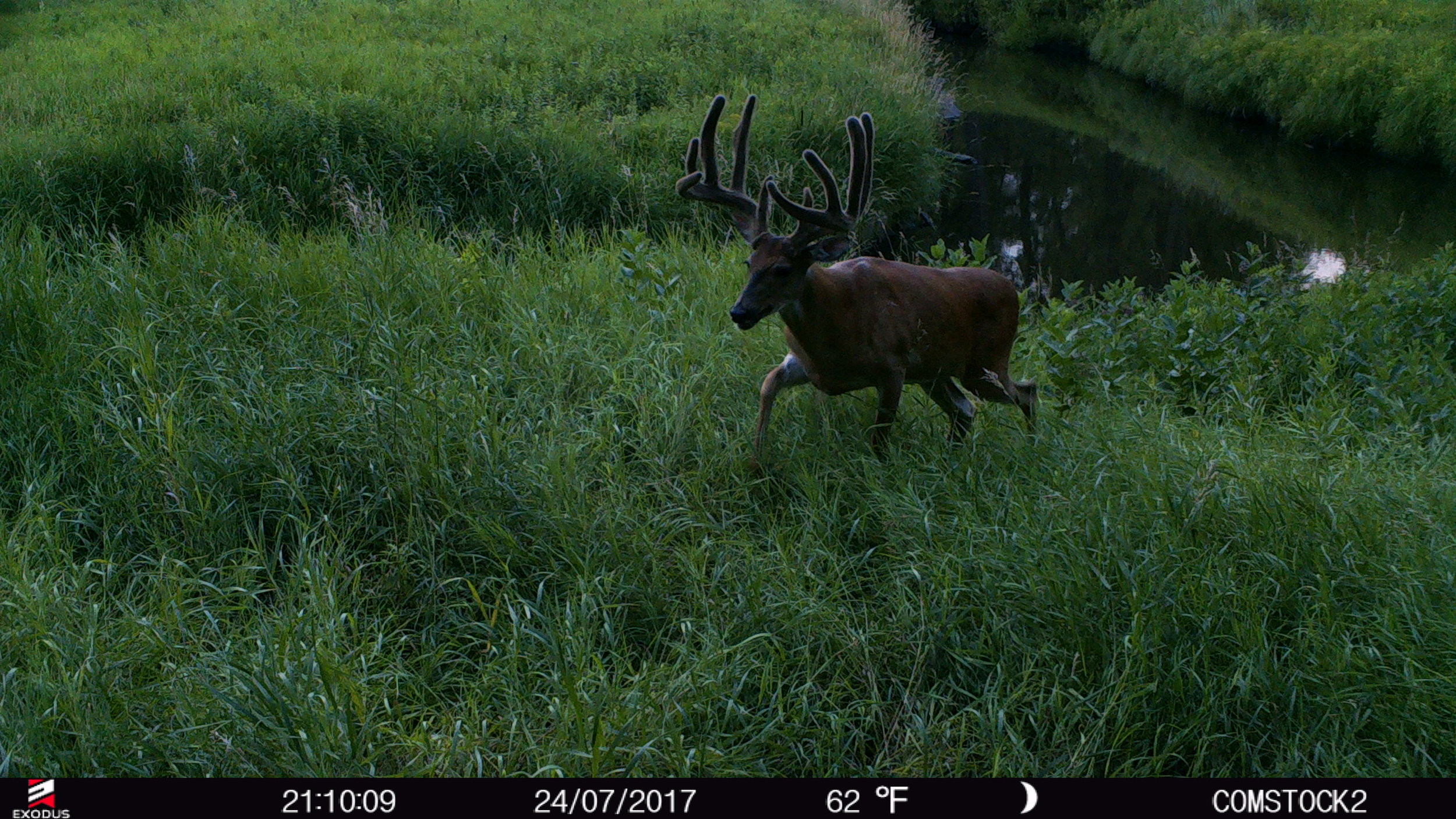 Over the course of the next few weeks, I'll be trying to figure out how to put this buck down.