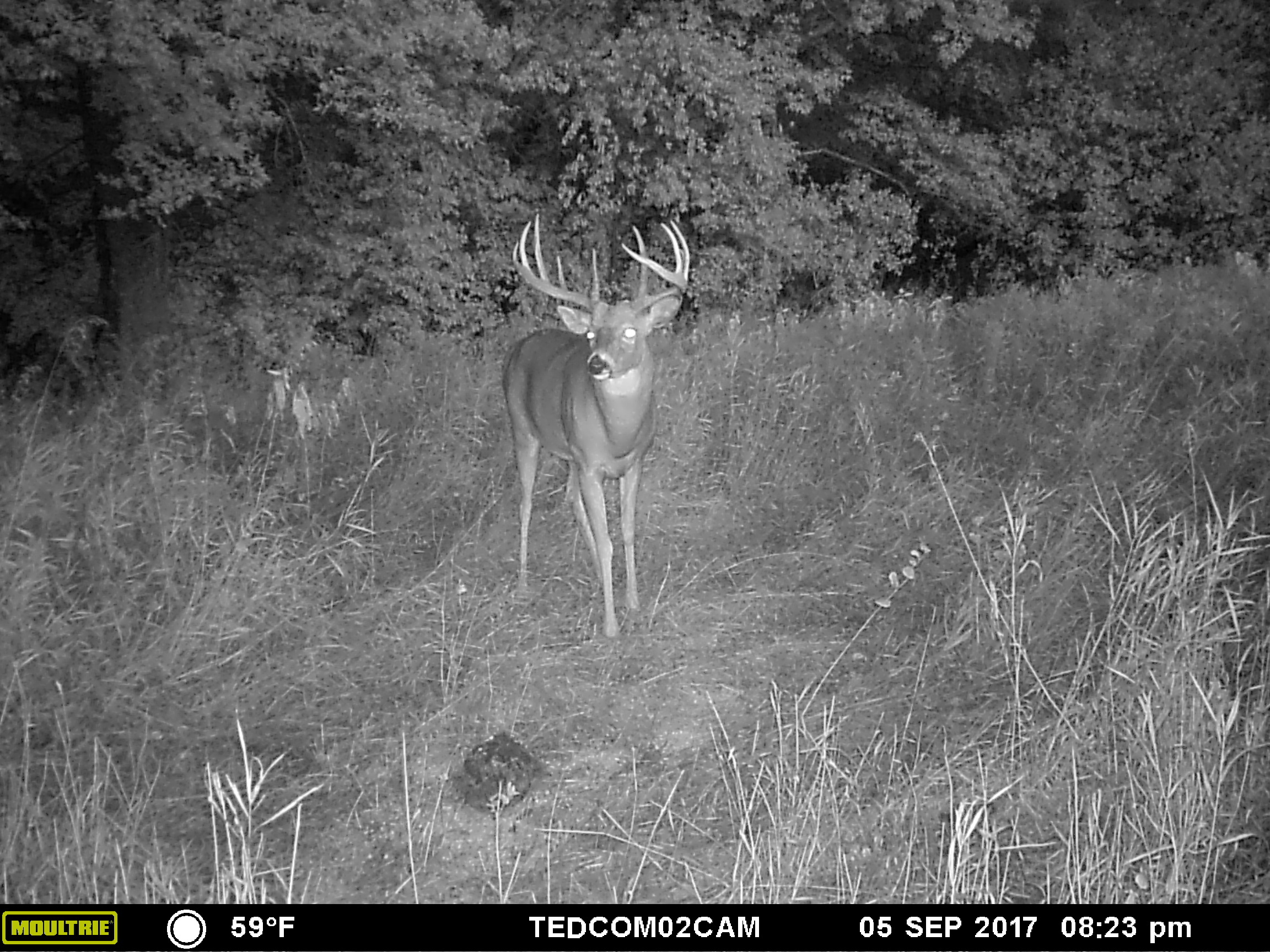 """This buck I've dubbed """"Trips Jr"""" showed up on the 5th with over ten minutes of legal light still left."""